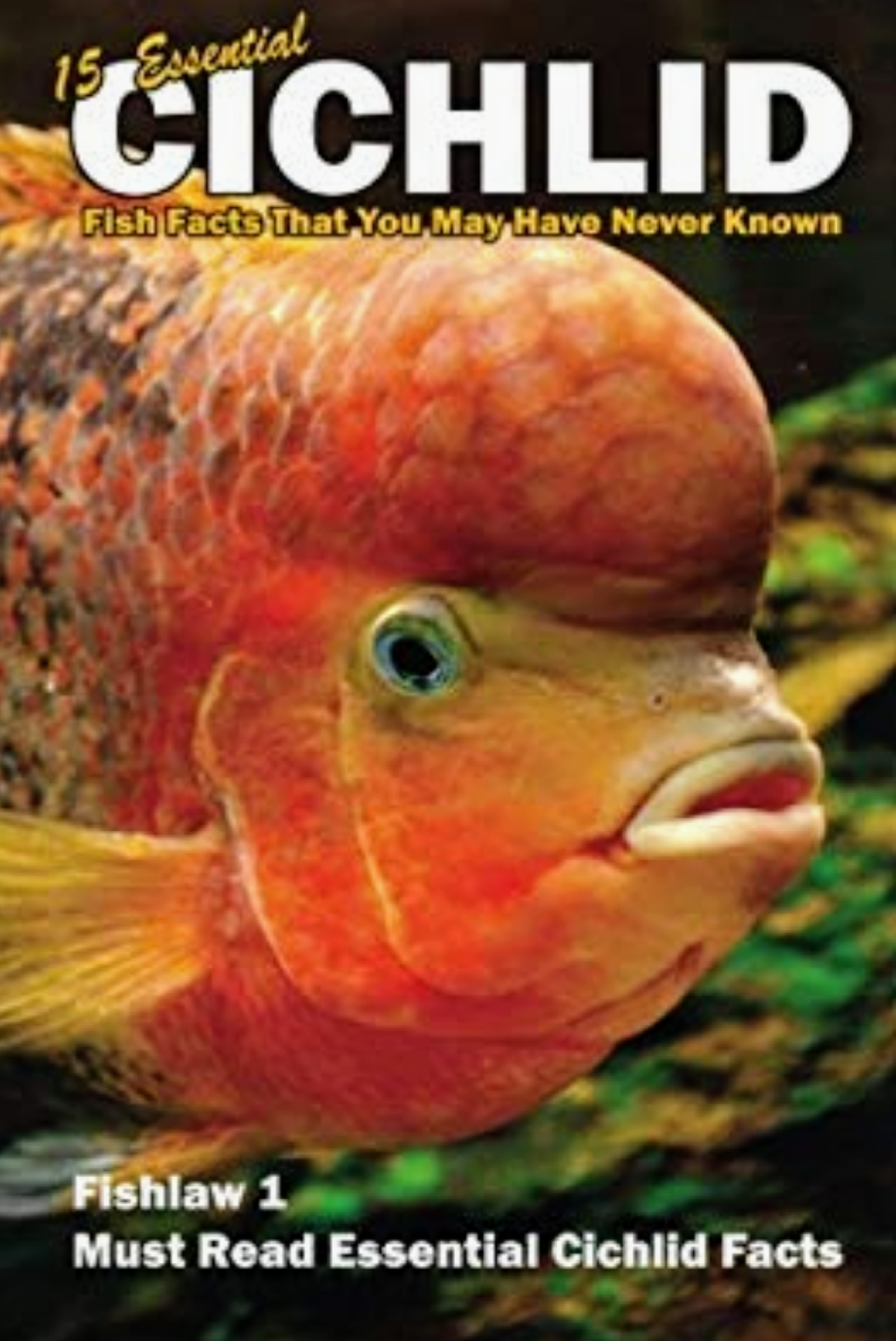 15 Essential Cichlid Fish Facts That You May Have Never Known,  Fishlaw1 Must Read Cichlid Facts | by Lawrence Smith