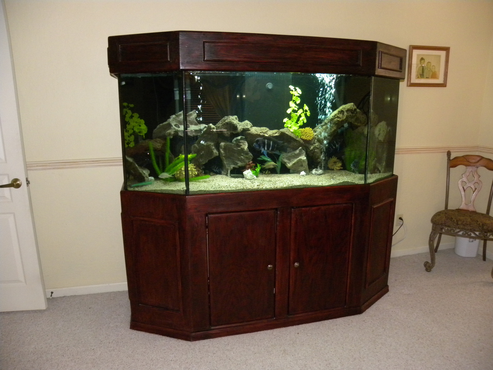 220 Gallon Tang Tank | by Marti and Matt