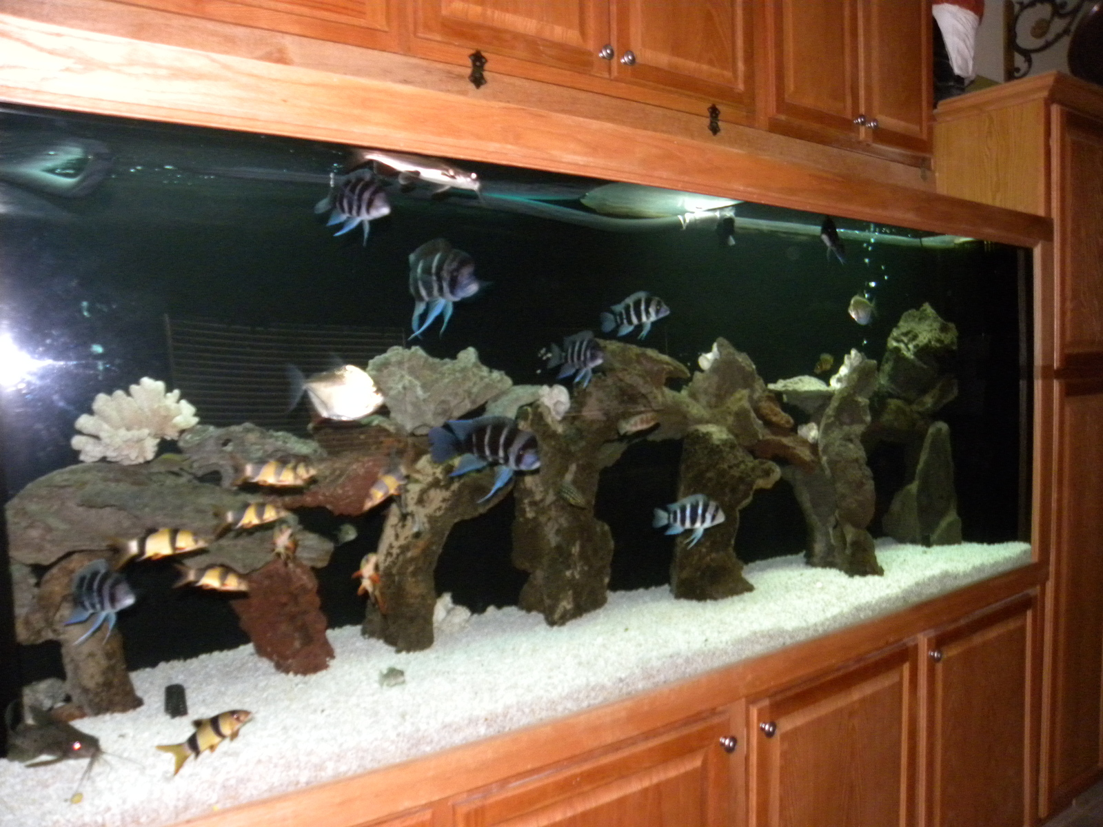 350 Gallon Tang SOLD :( | by Marti and Matt