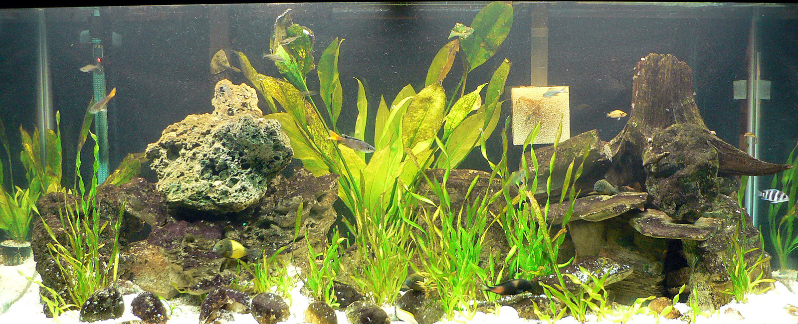 My Tang Tank! Updated 11/10/07 | by Chris Miller