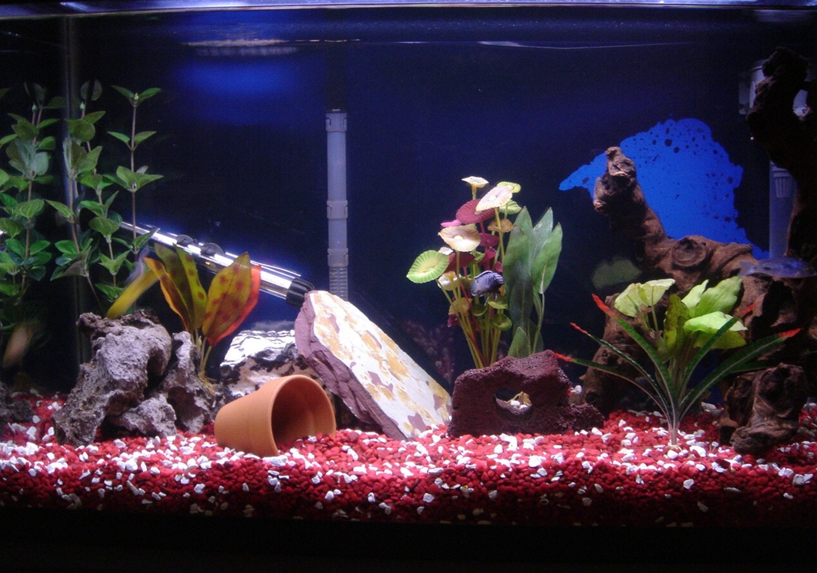 New decor in tank for hiding | by Shonna Mode