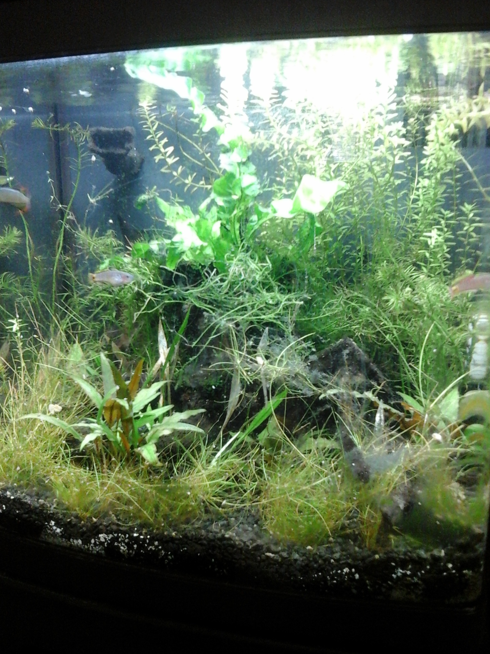Biocube planted | by Tang O'