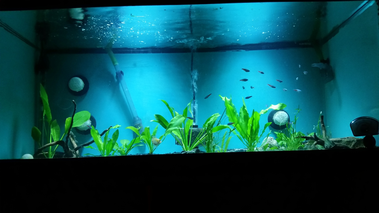 start of my amazon underwater jungle  | by cichlid i-am