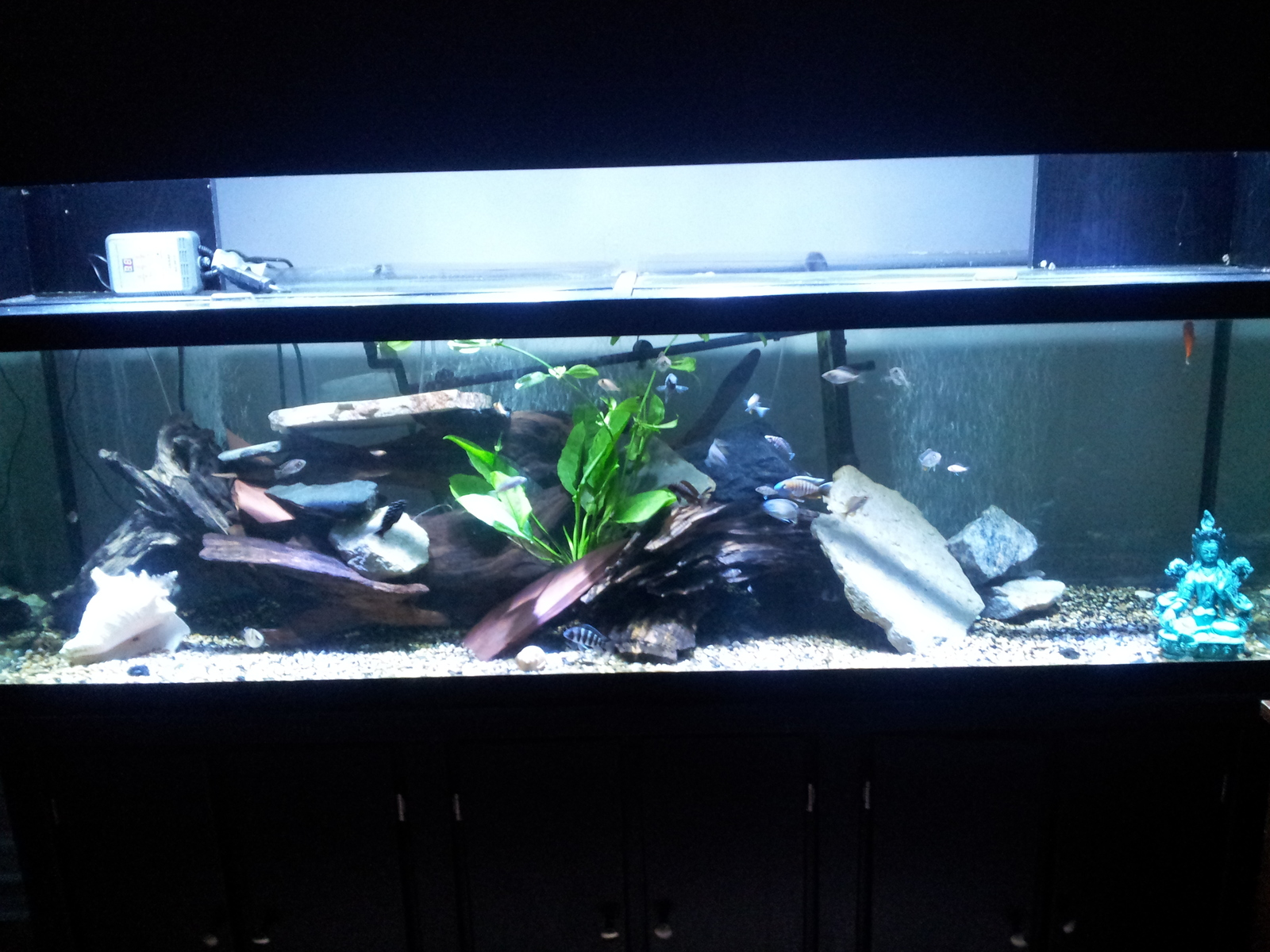 New Plants 125 gallon African | by Ted Neubauer