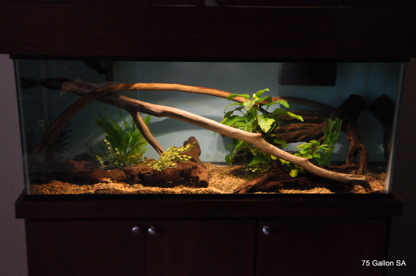 75 Gallon SA Pike setup | by Damien Fallin