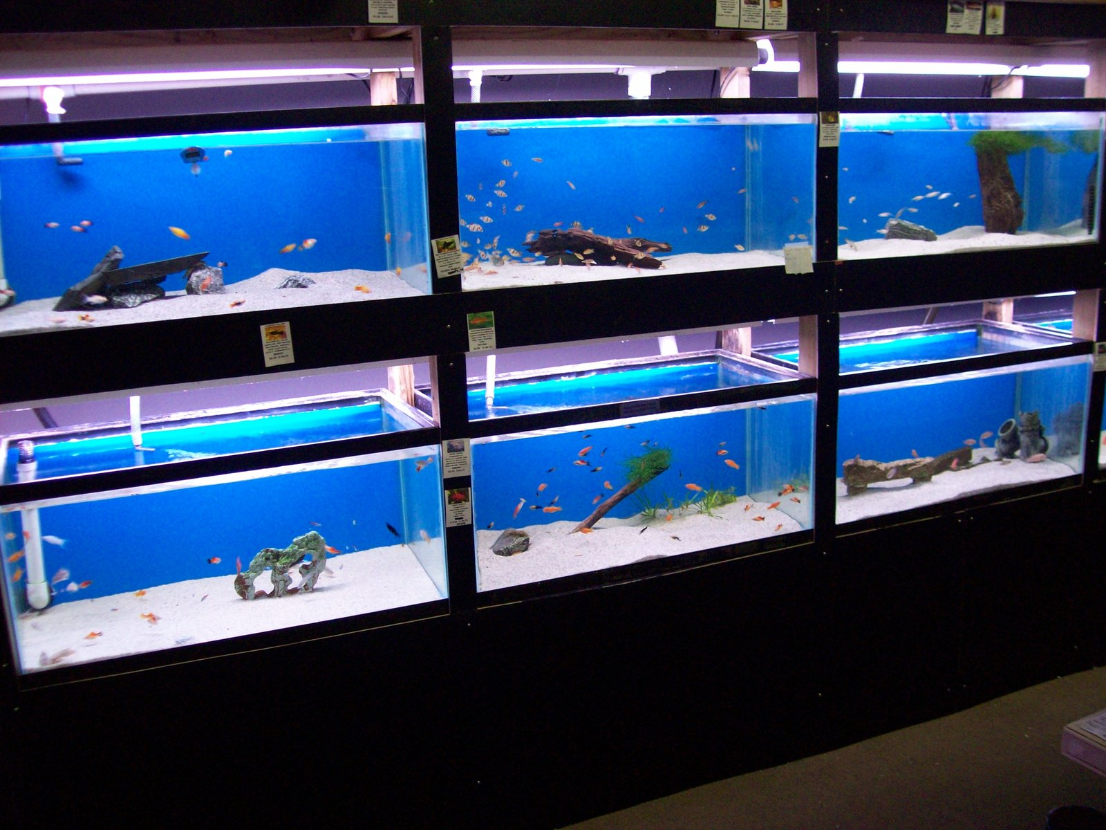 6 freshwater tanks with new trim | by Justin Deans