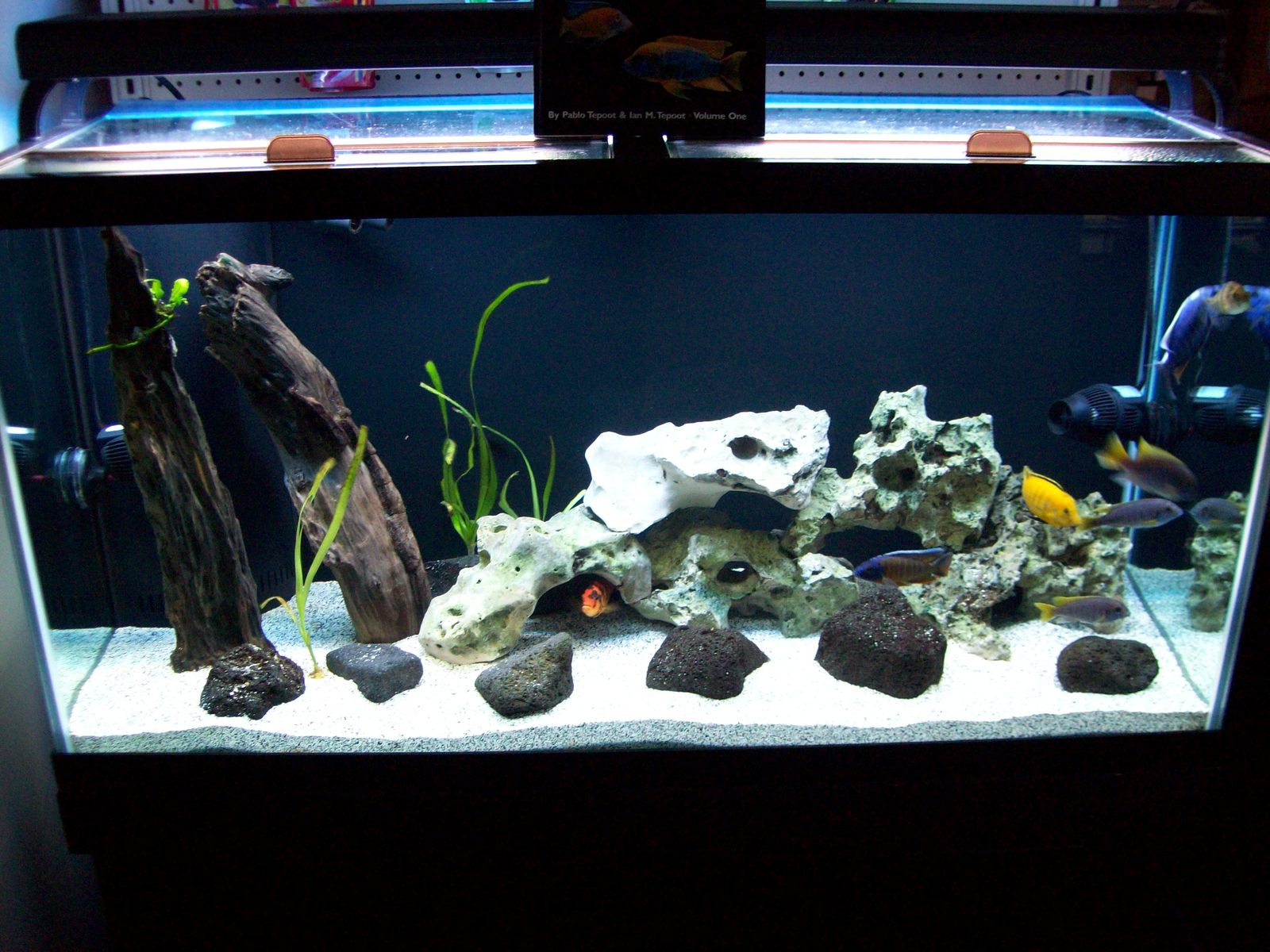 90 gallon display tank | by Justin Deans