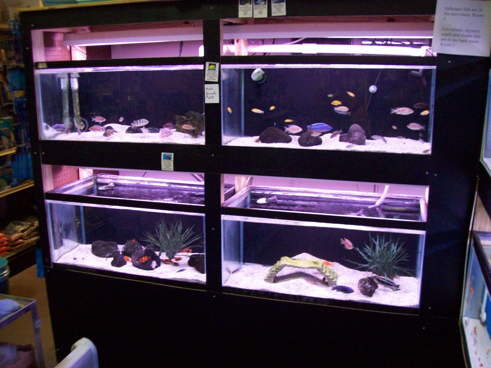 African cichlid system 165 gallons | by Justin Deans