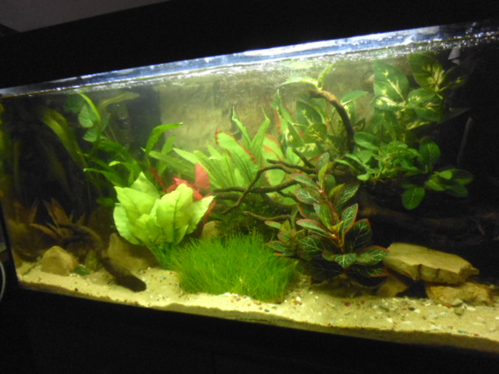 planted tank  nearly done  | by keith banks