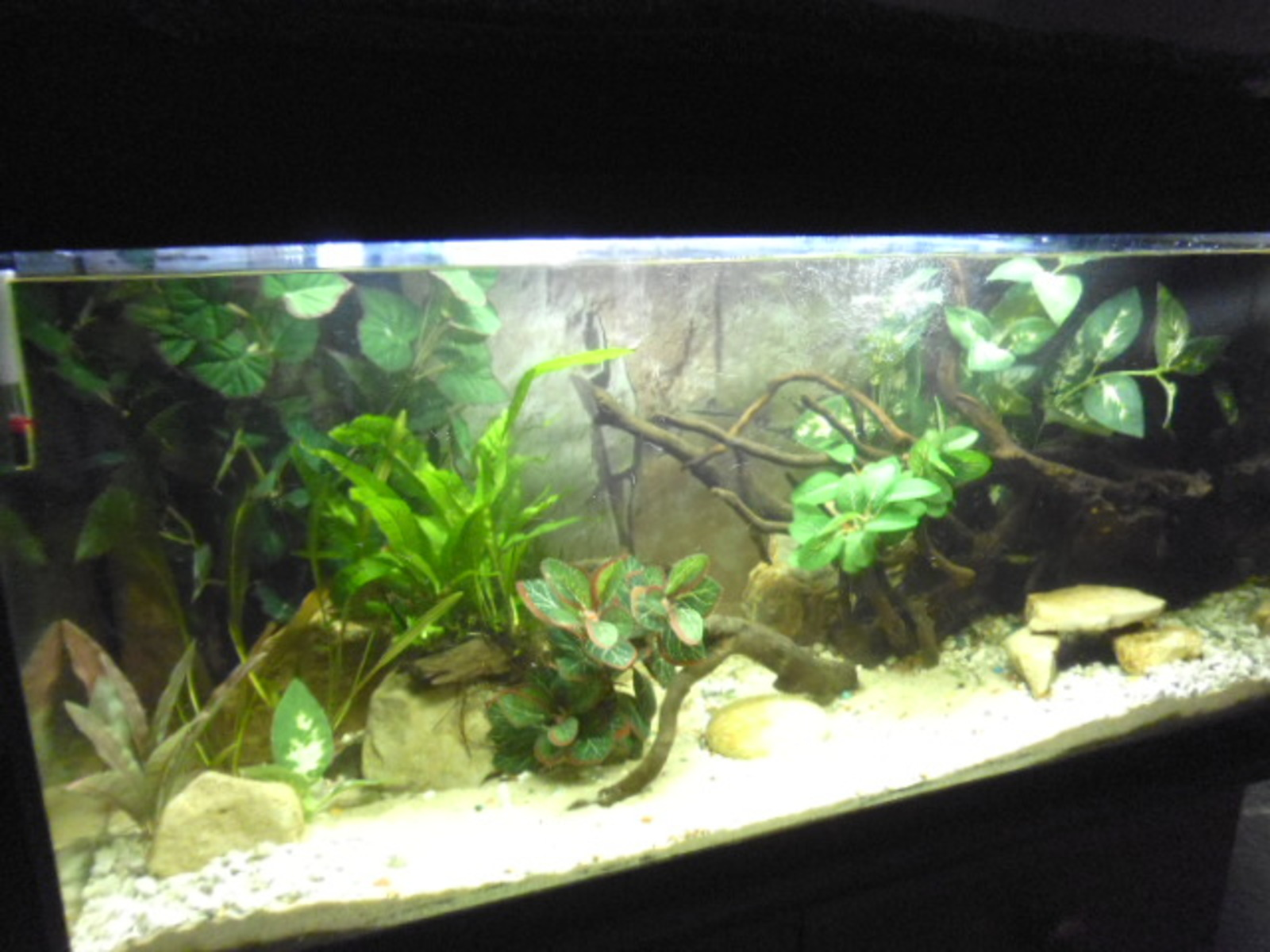 planted tank week 2 | by keith banks
