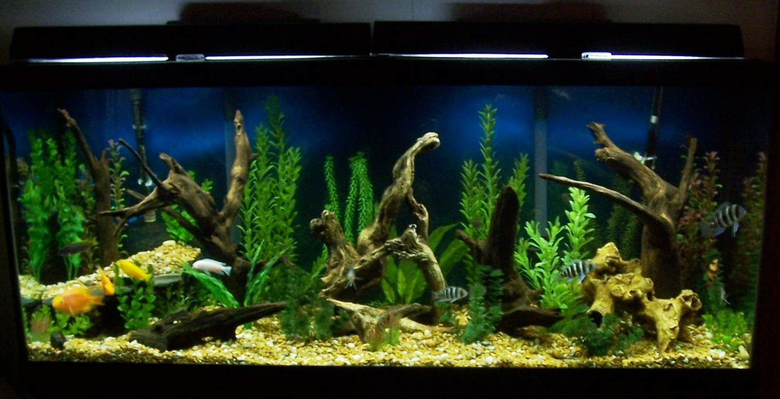 updated tank pic | by steve barker