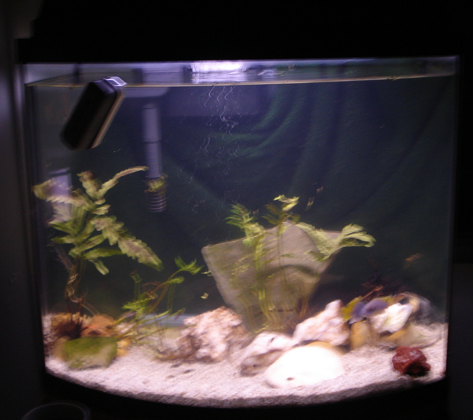 Salt water  tank-- any suggestions | by Tina Welch