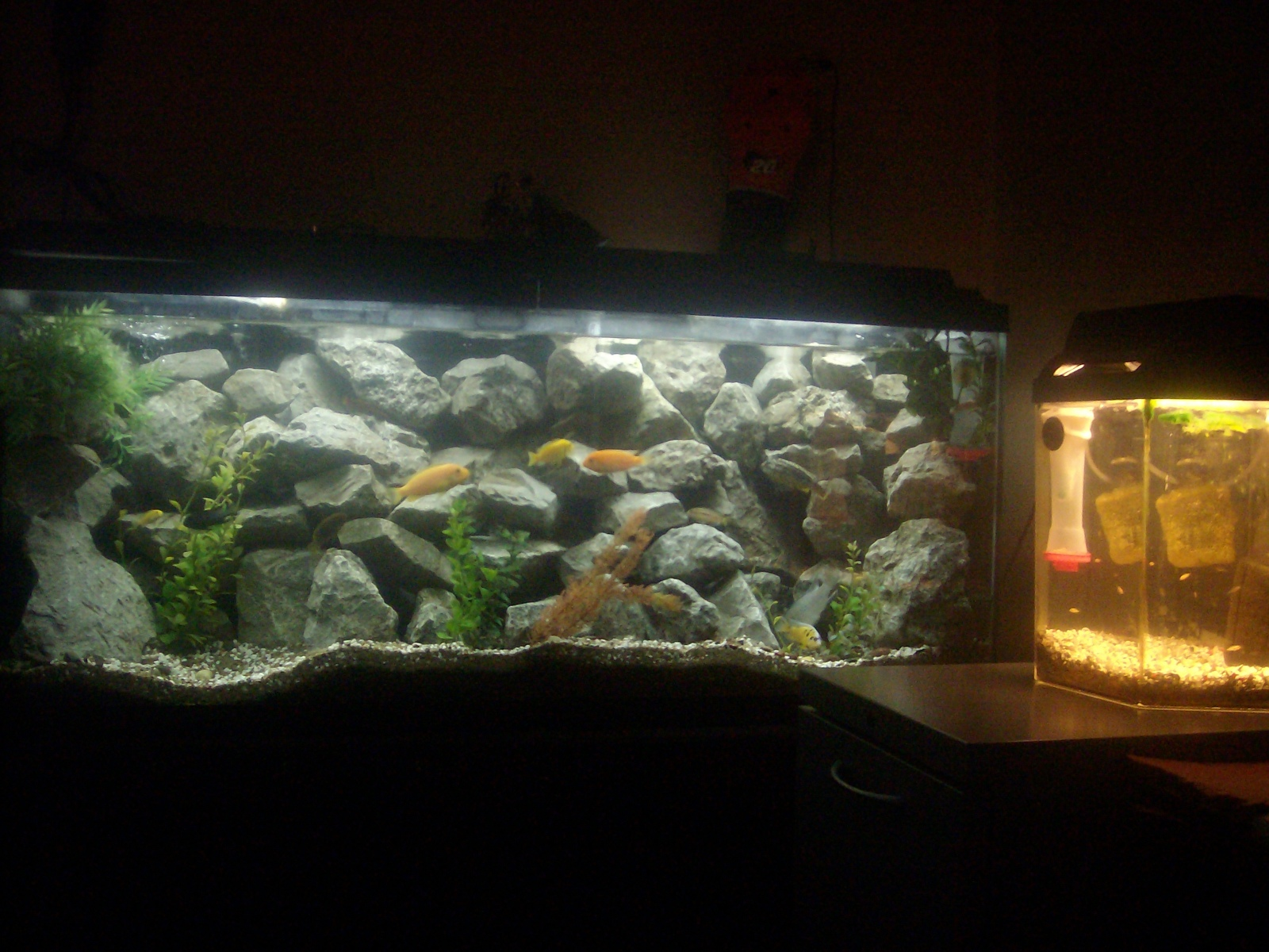 my fish tank  | by phillip manske