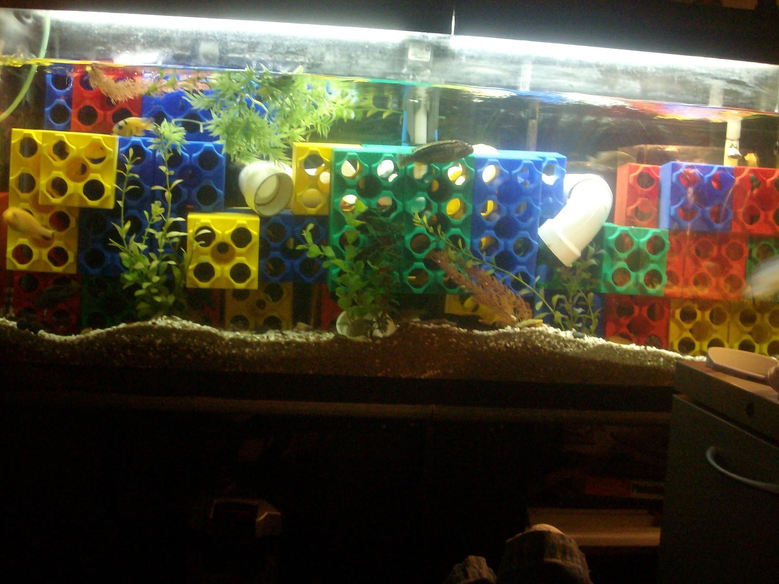 my breeding tank  mixed af cichlids  | by phillip manske