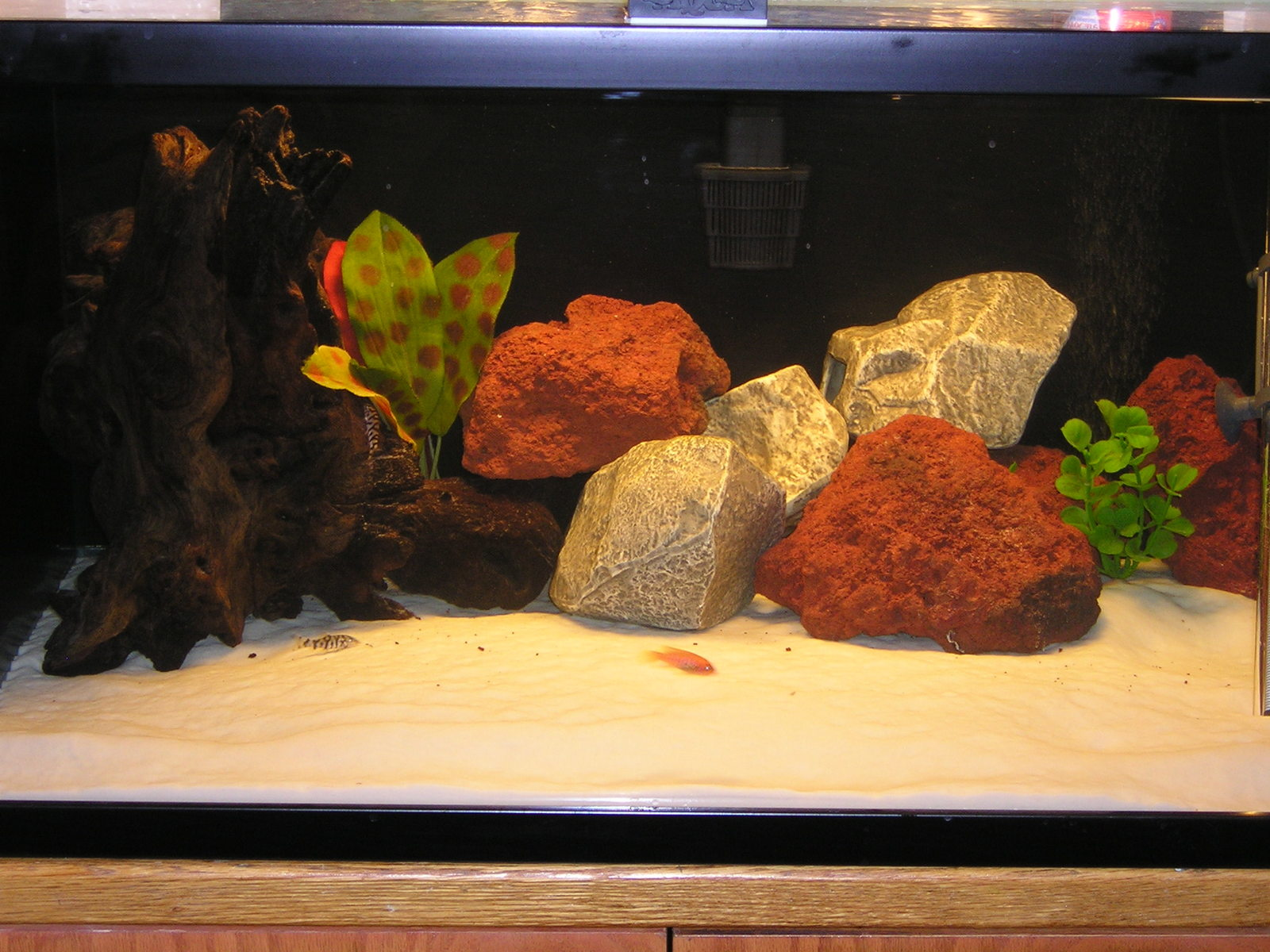 new tank setup | by Jay William