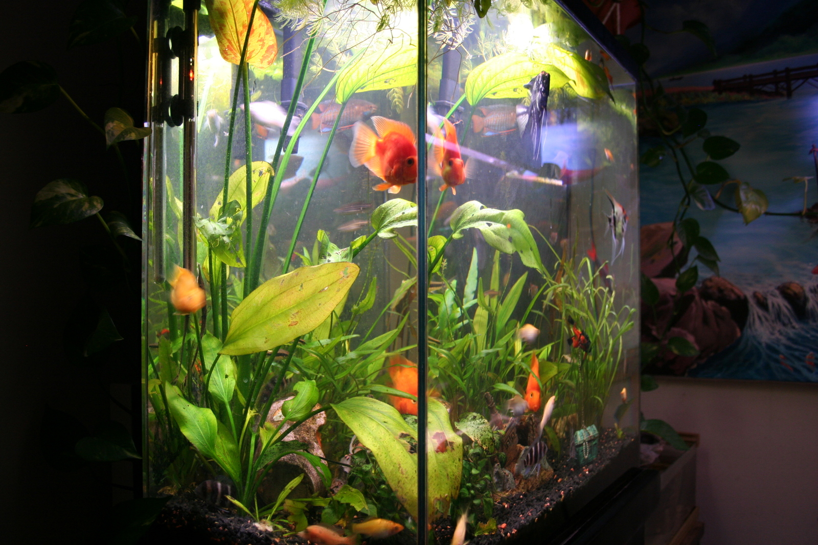 Cichlids in tropical setting..LOL | by Sleek Sliders