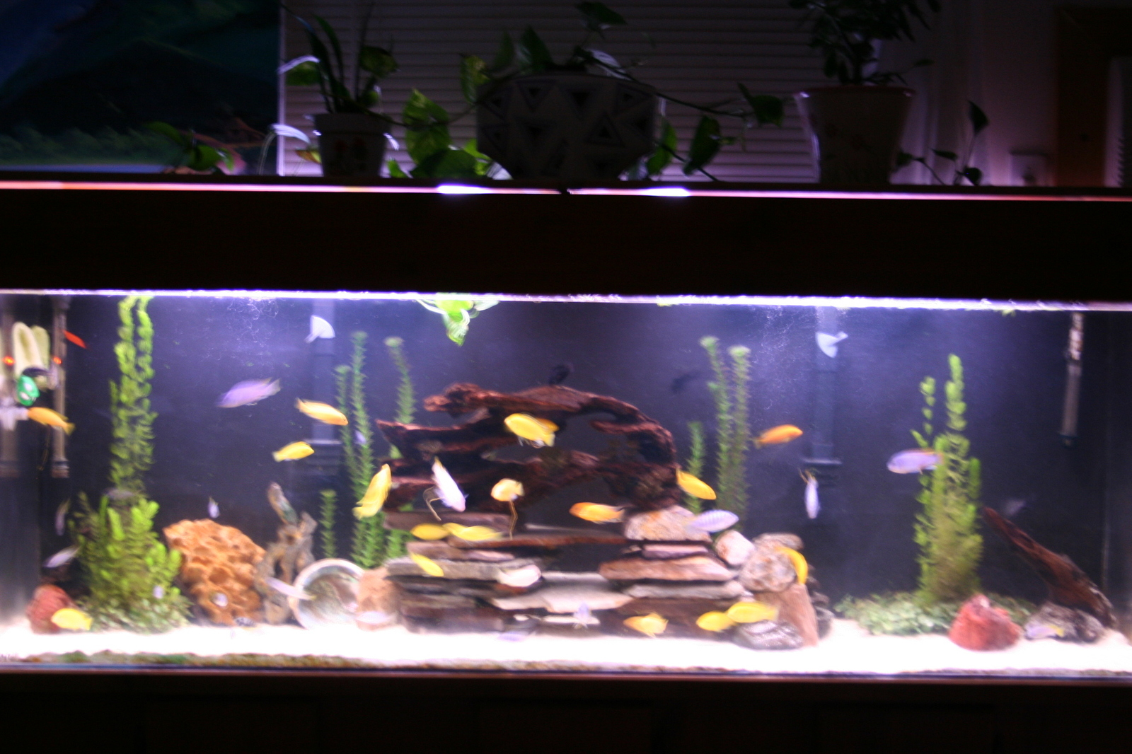 My New Mbuna Set Up | by Sleek Sliders