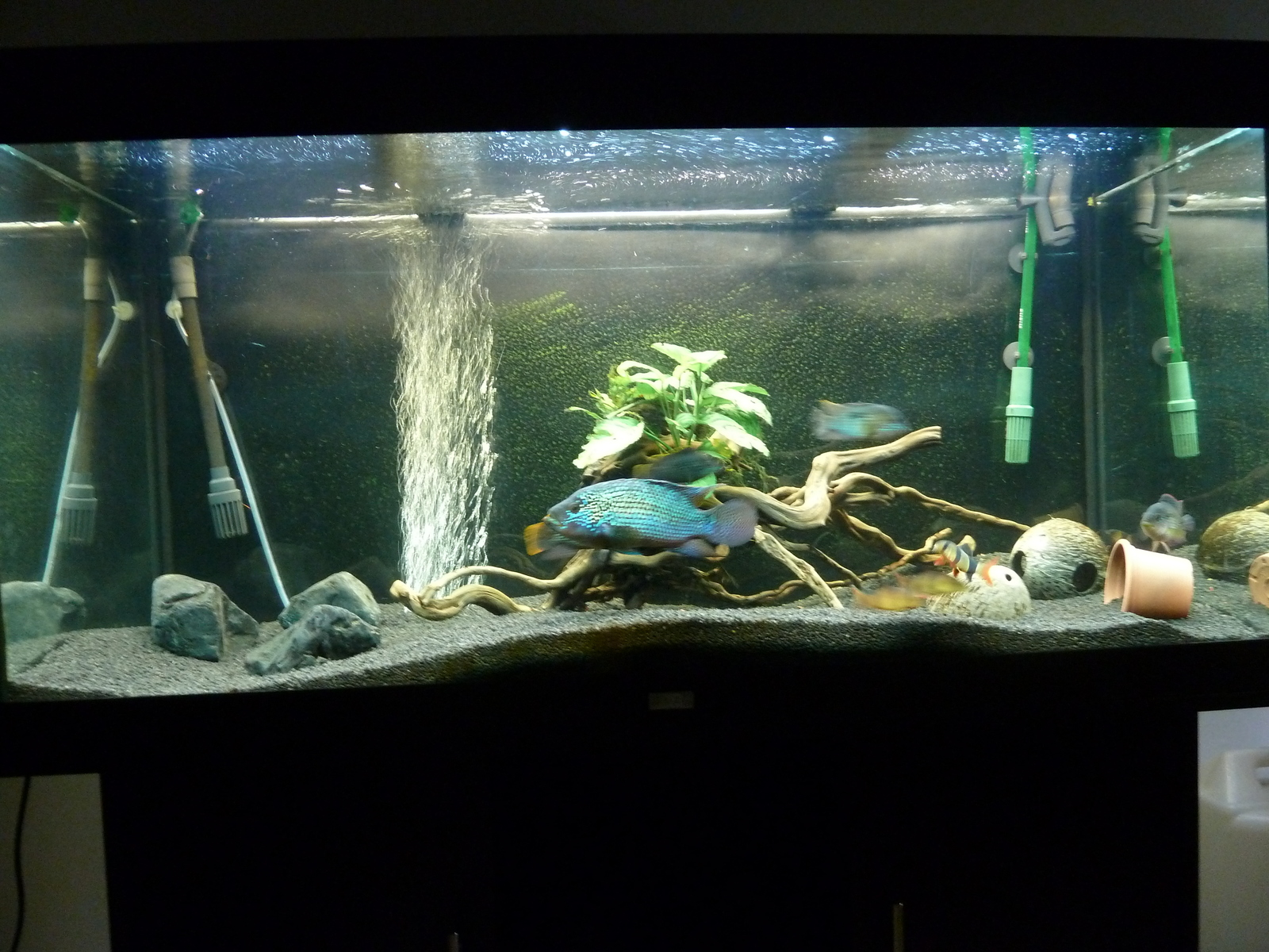 Update 380 liters SA/CA tank | by Michael Sorgato