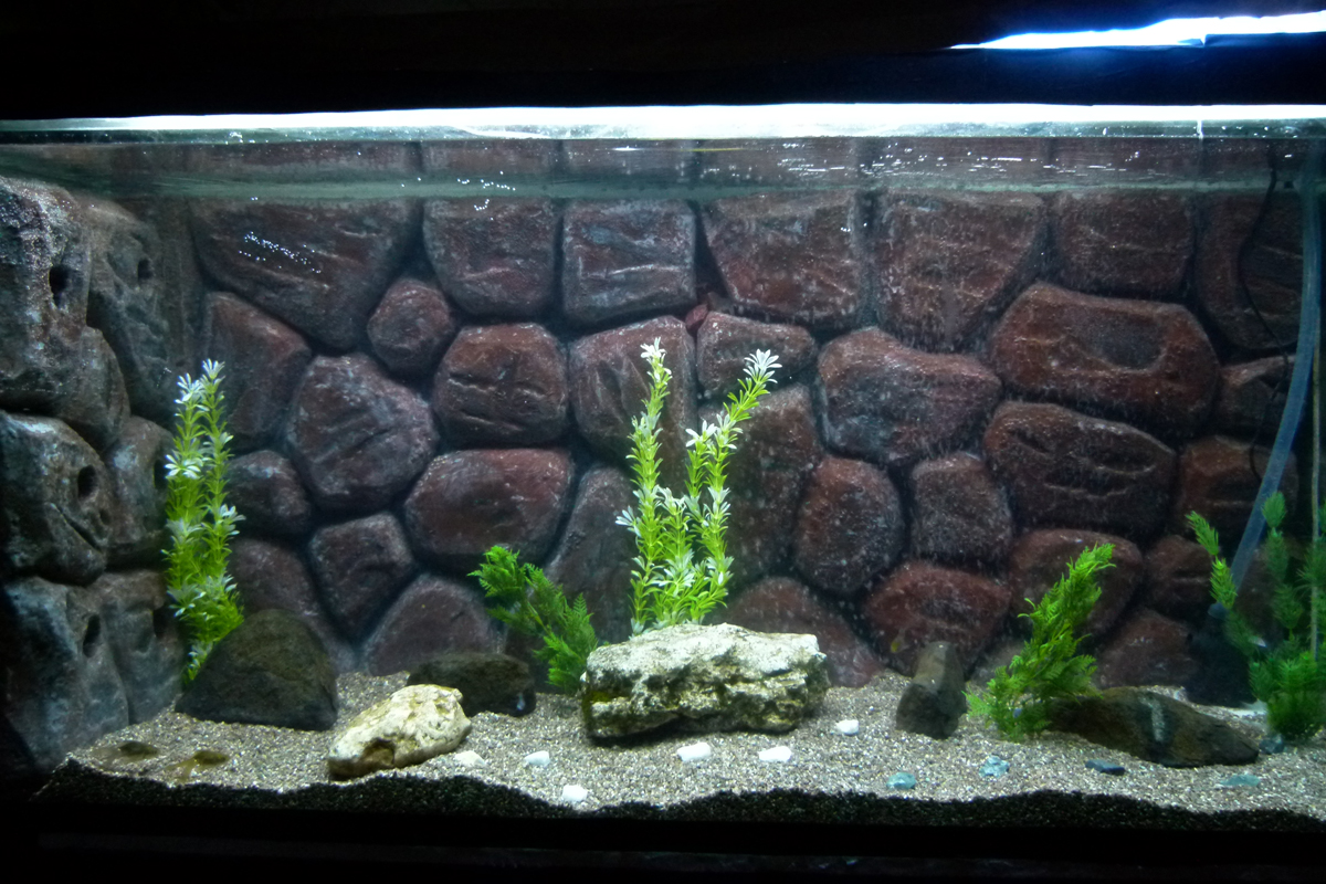 Rabee3 New Diy Aquarium