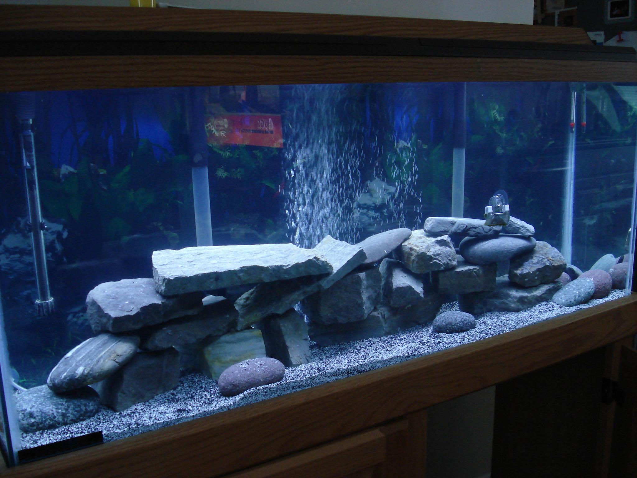 Cichlid Tank Salt my First Cichlid Tank