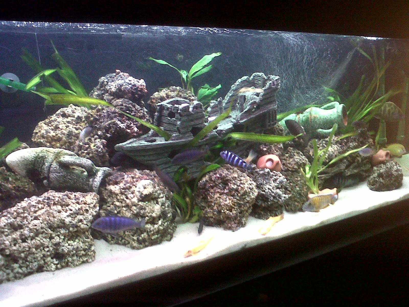 Tank examples new lava rock tank setup for Rocks for fish tank