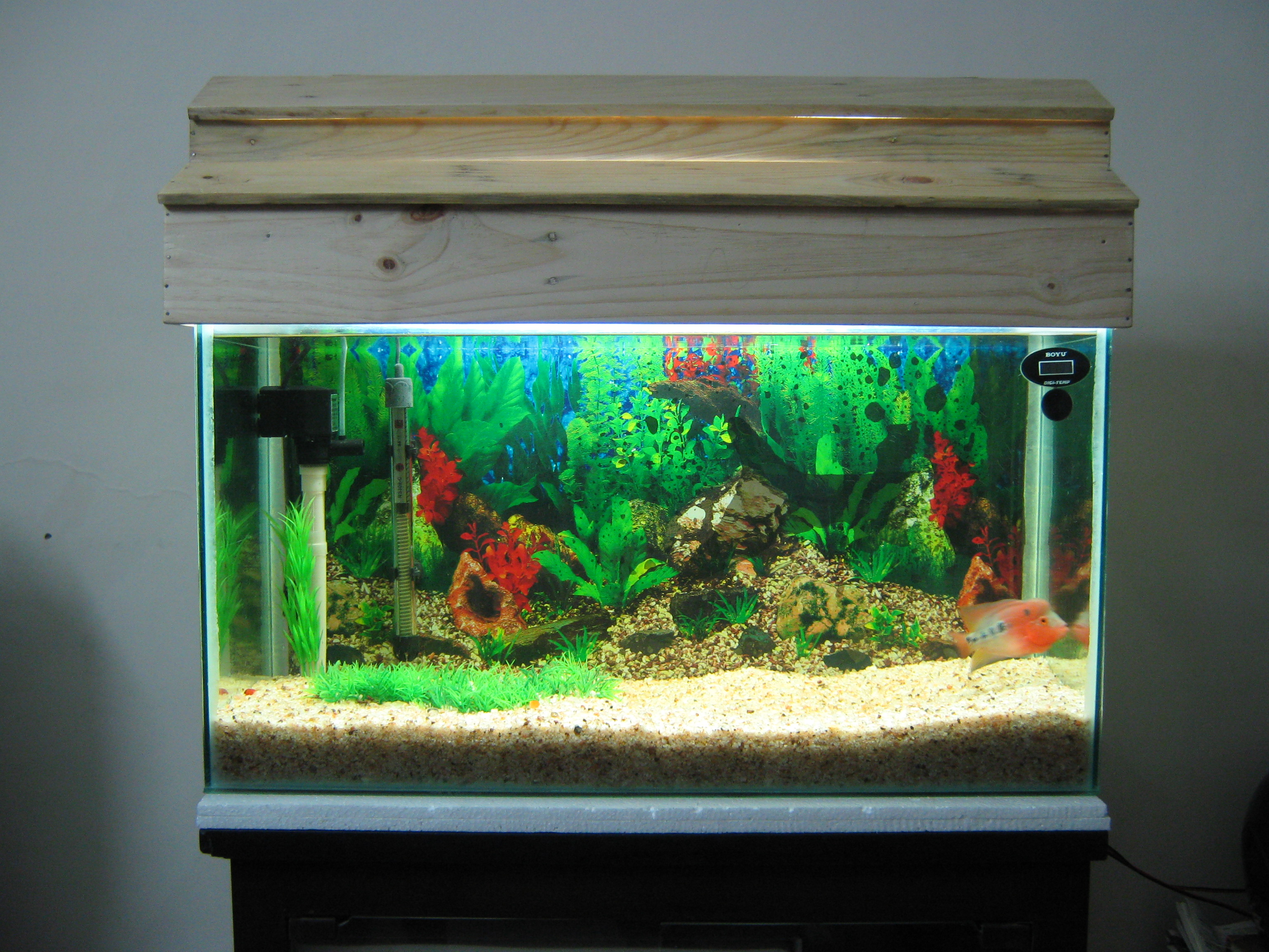 Pics for flowerhorn fish tank for A fish tank