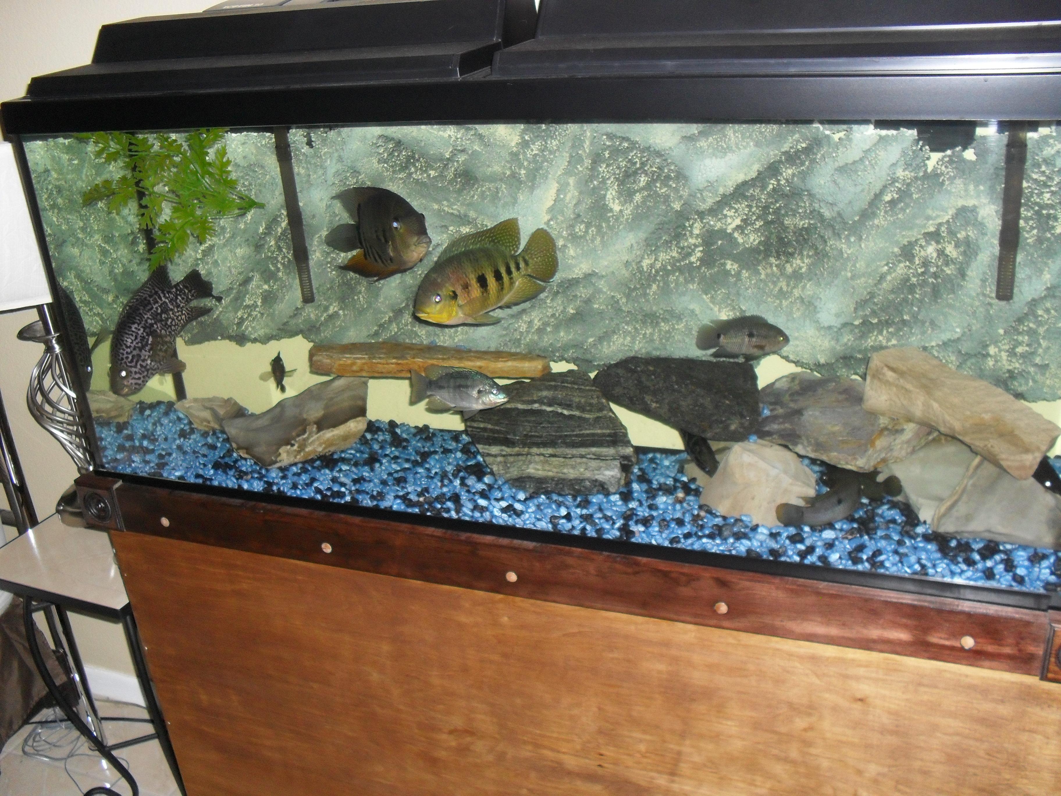 B g on big fish tank for Big fish tank