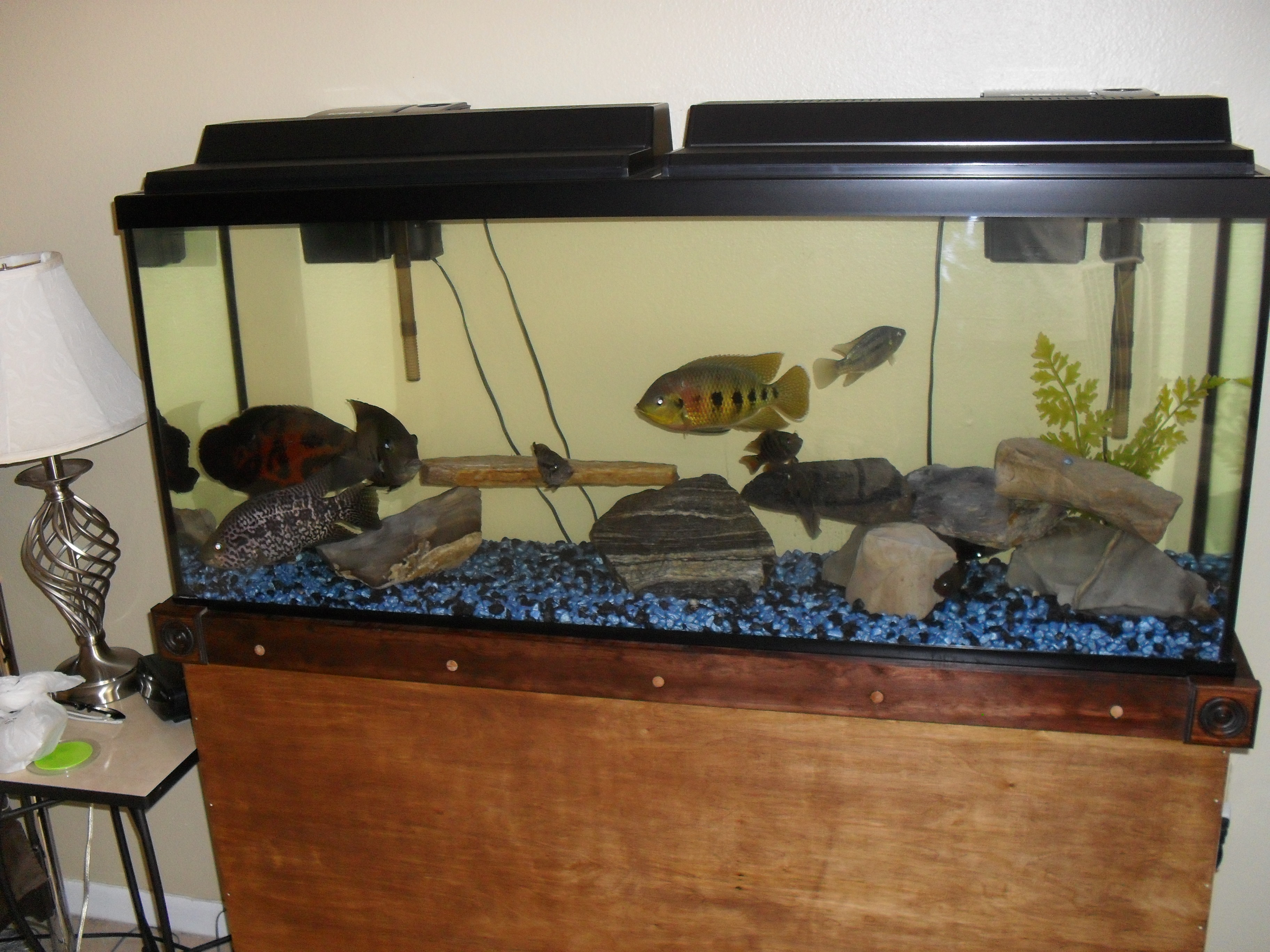Big fish tank for Cheap big fish tanks