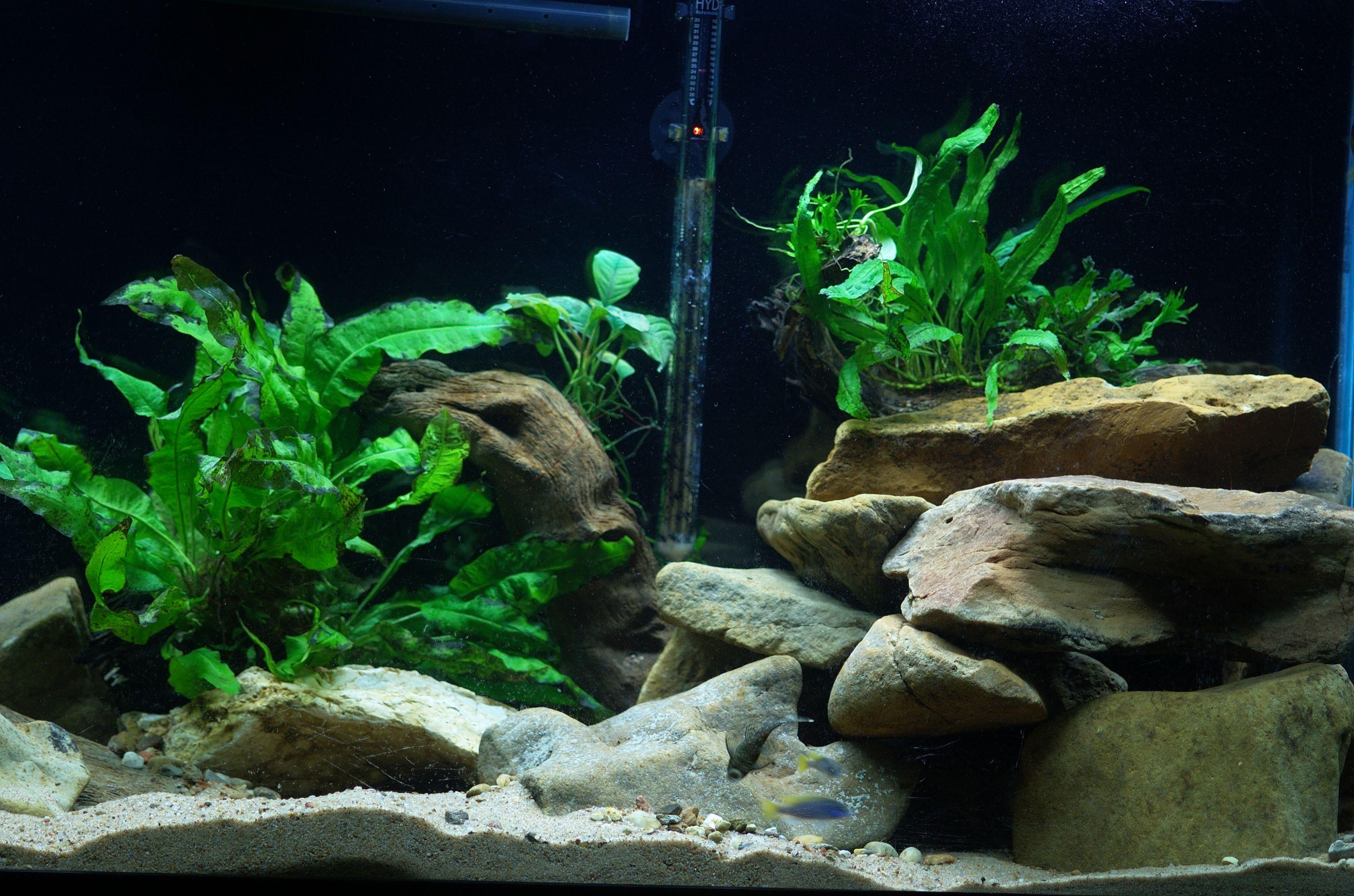 cichlids.com: Aquascape in my 55 Gallon Mbuna Tank
