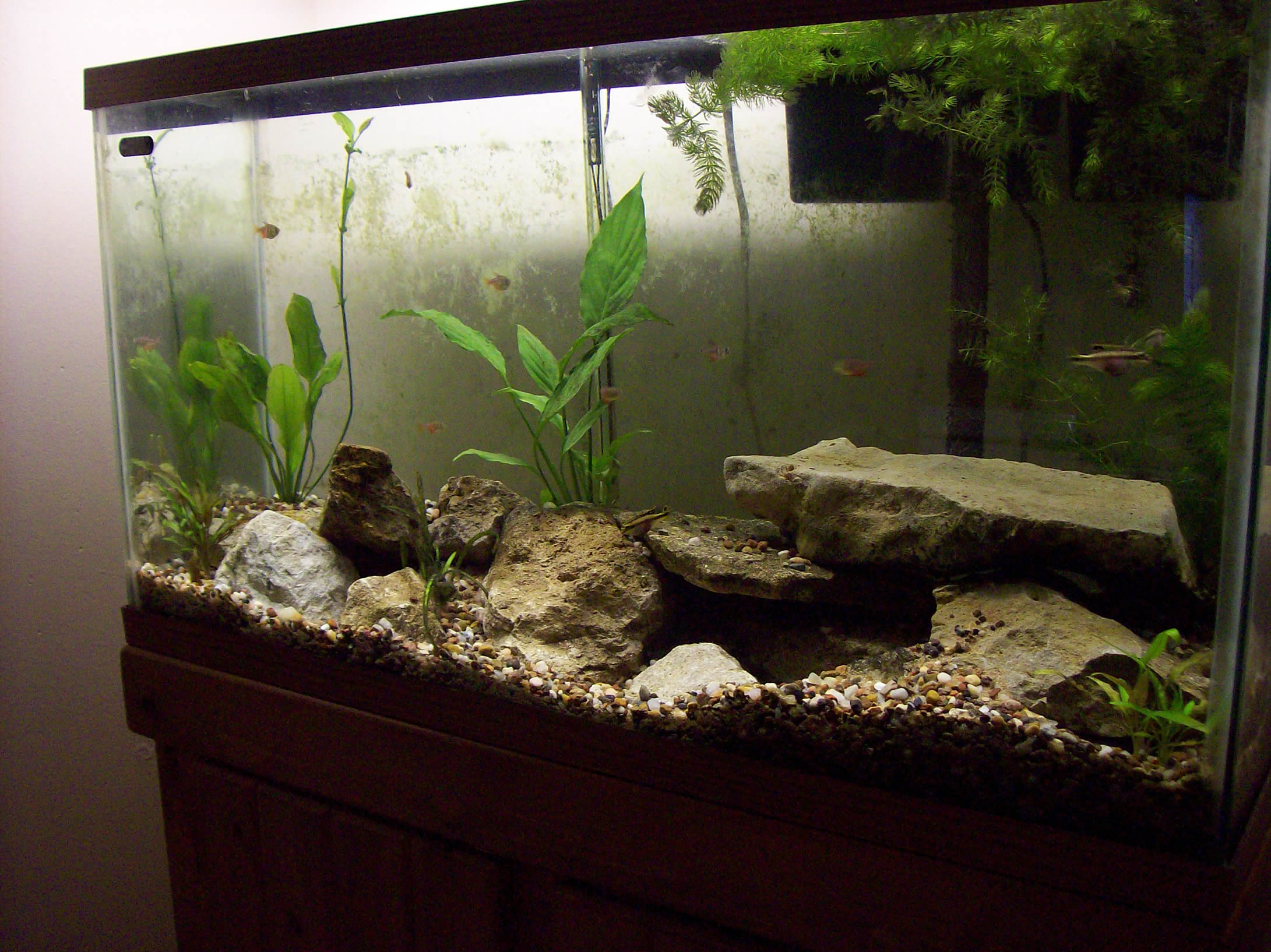 Tank examples 38 gallon west african themed for 38 gallon fish tank