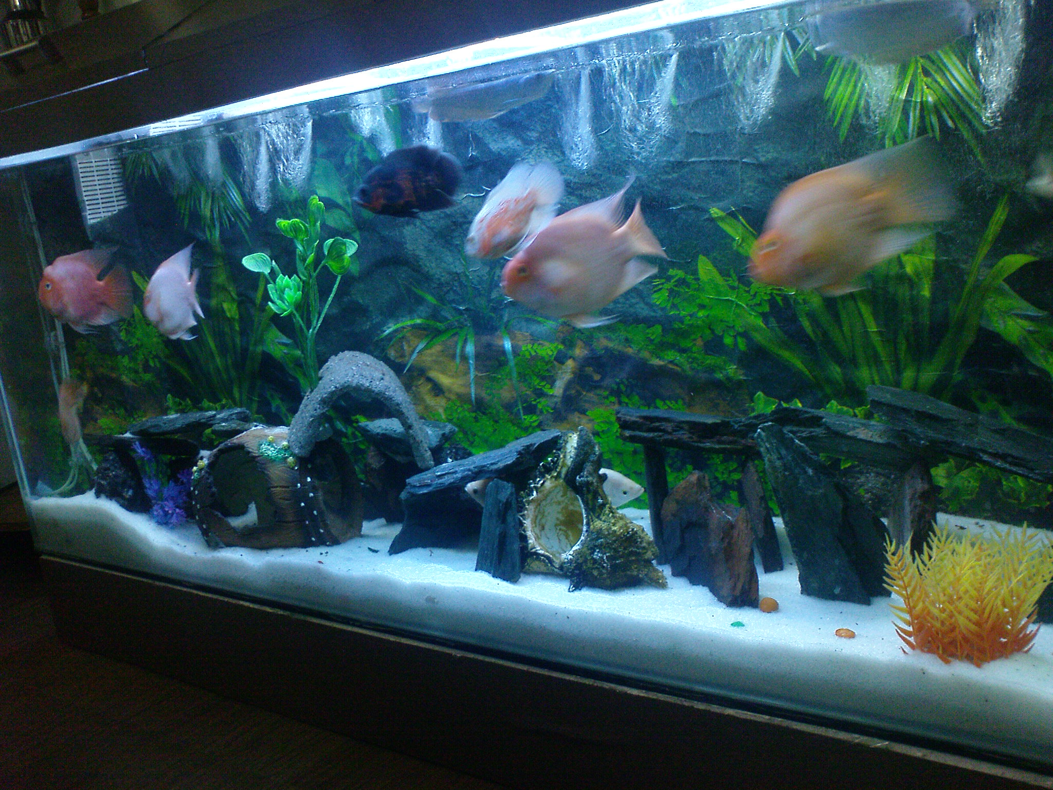 Tank examples for Arowana tank decoration