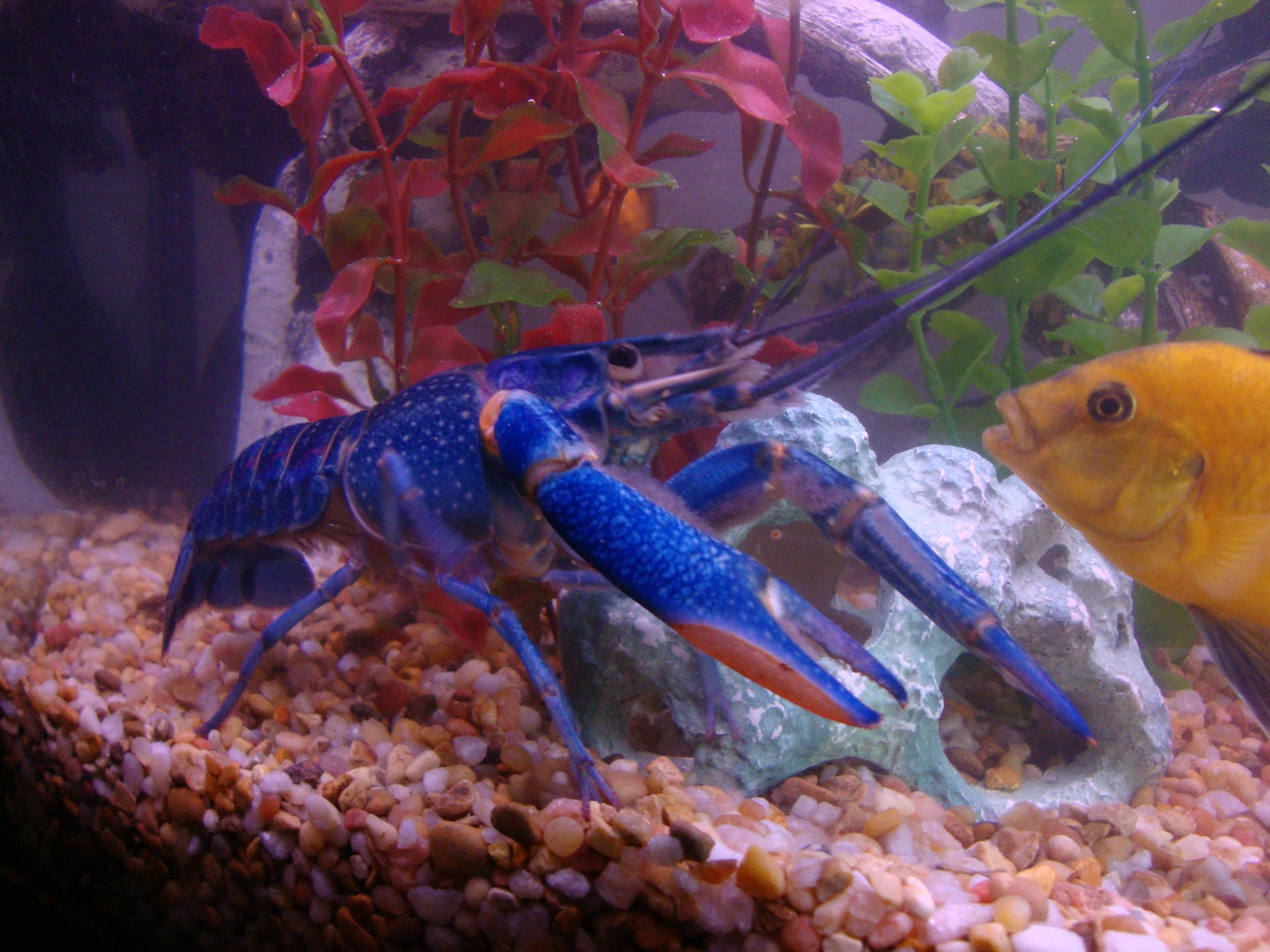 Keeping freshwater aquarium fish - You Can Keep These In A Fresh Water Aquarium I