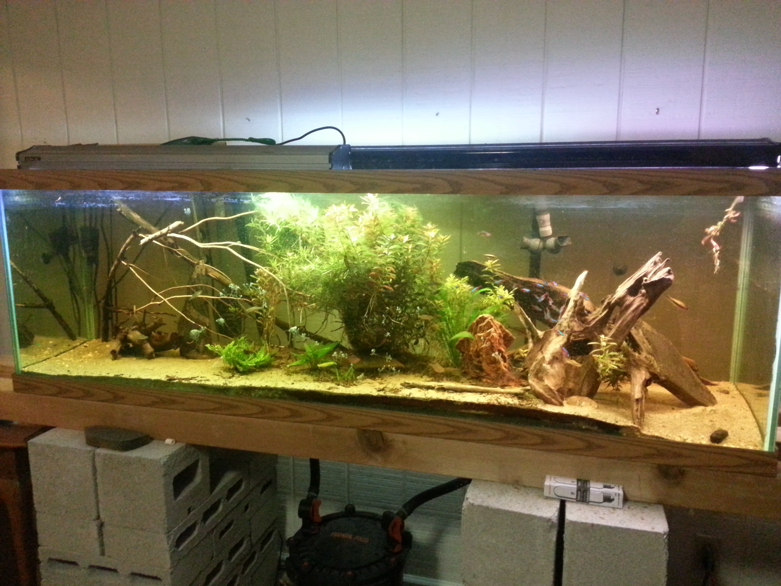 125 gallon planted aquarium for 20 gallon fish tank size
