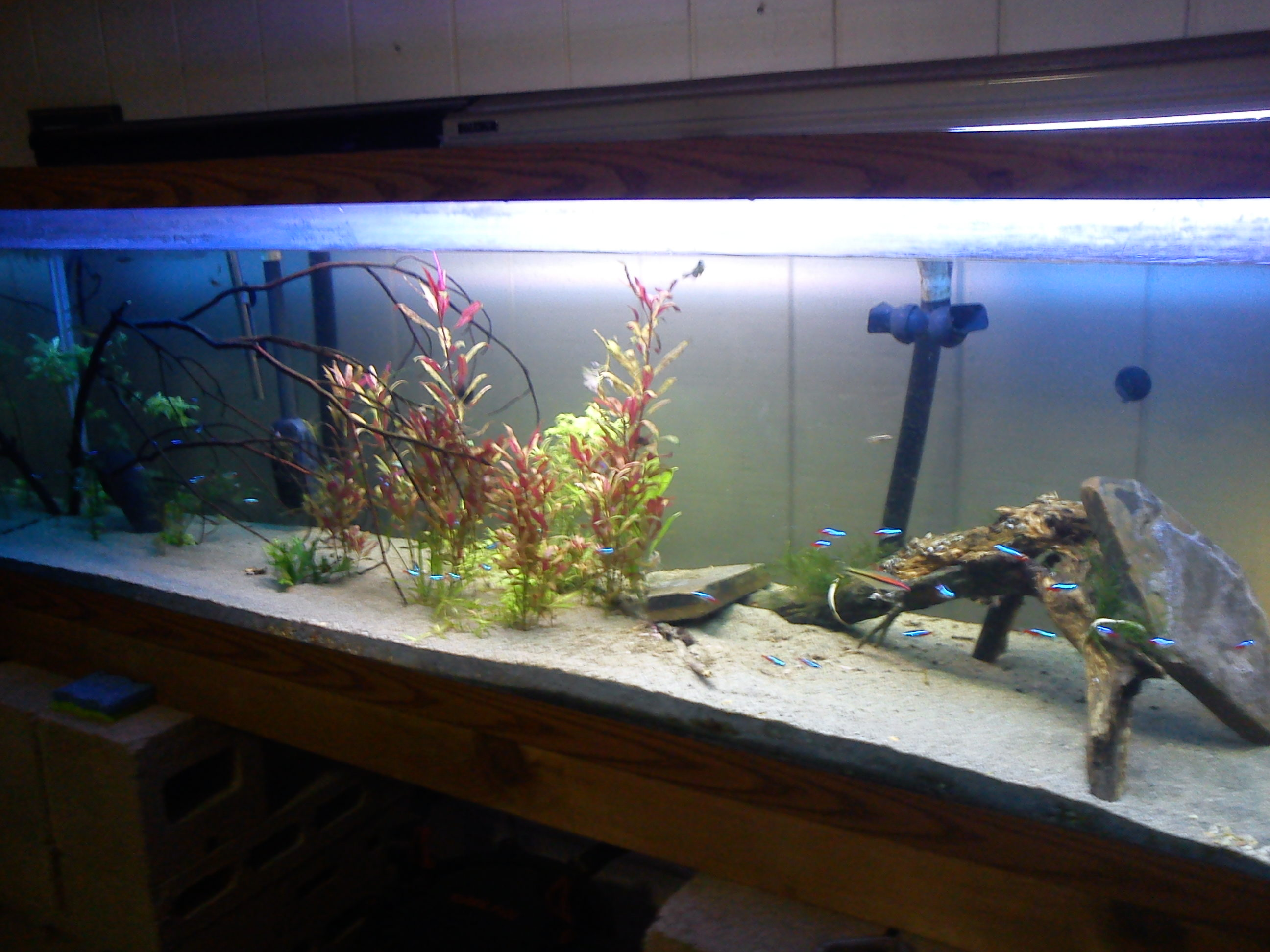 125 Gallon Aquarium : 125 Gallon Aquarium Related Keywords & Suggestions - 125 Gallon ...