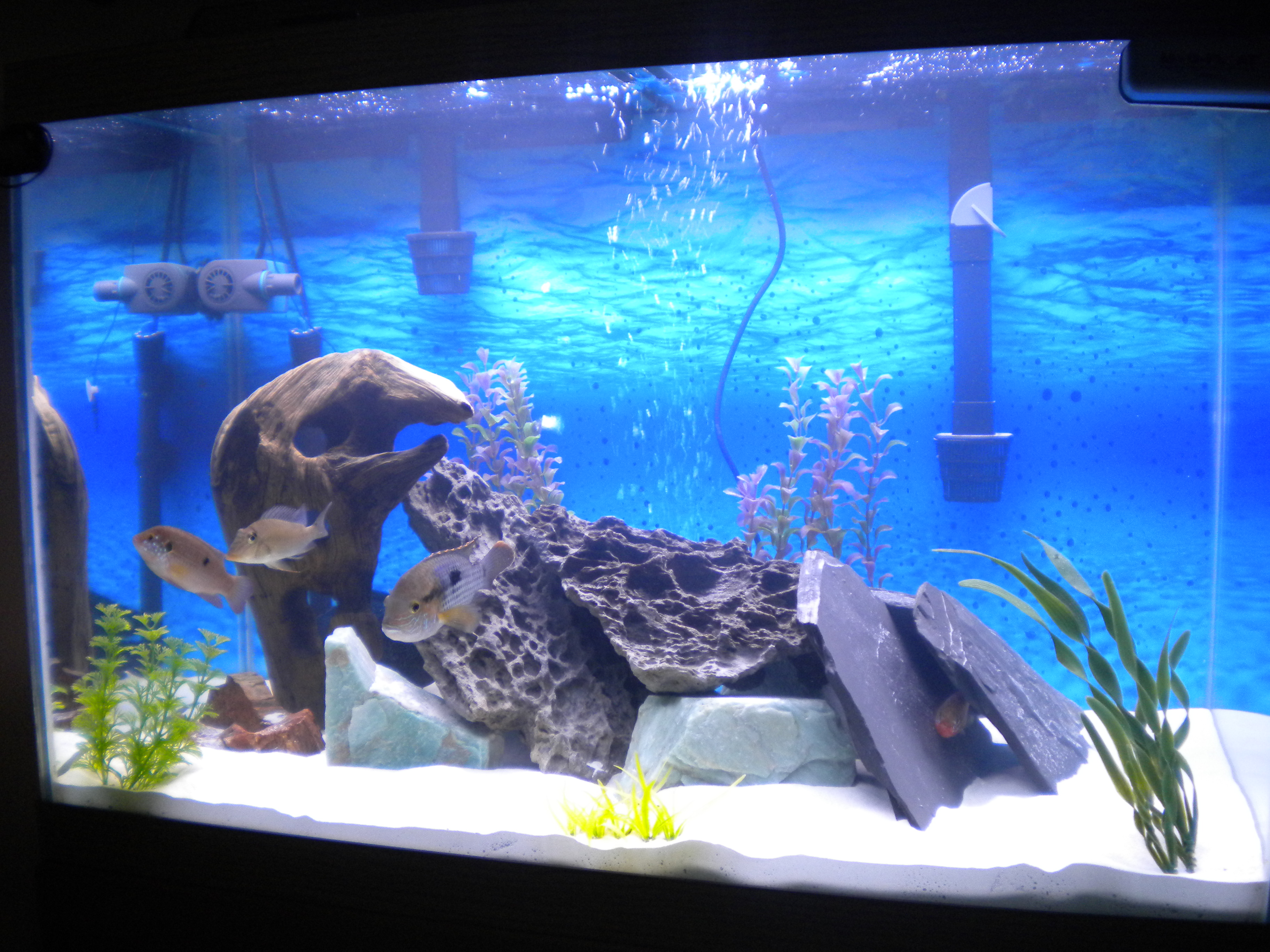 65gal south american with sand for Fish tank sand
