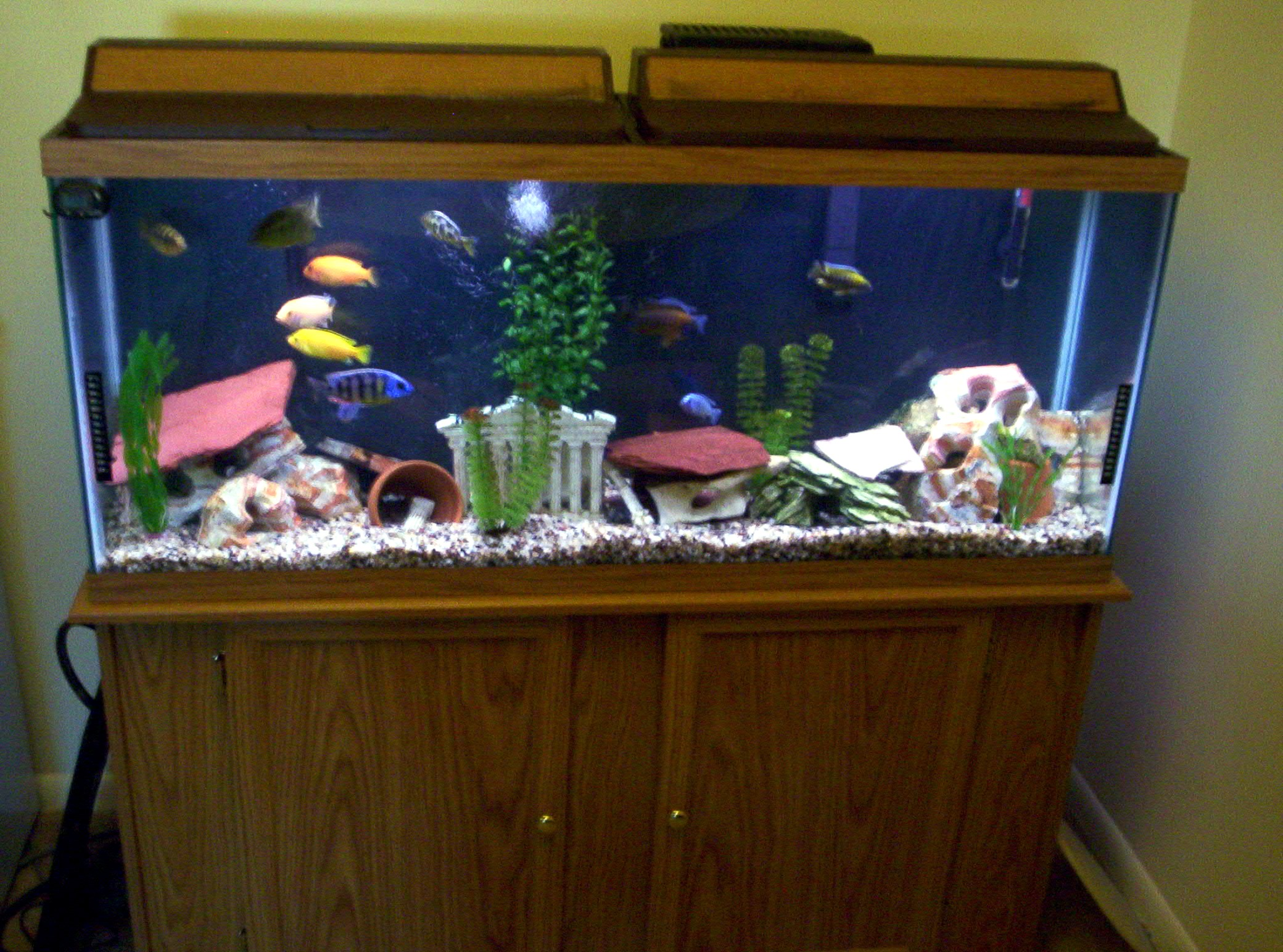 55 gallon fish tank in litres fish tank pauls 55 gallon for Oceanic fish tanks