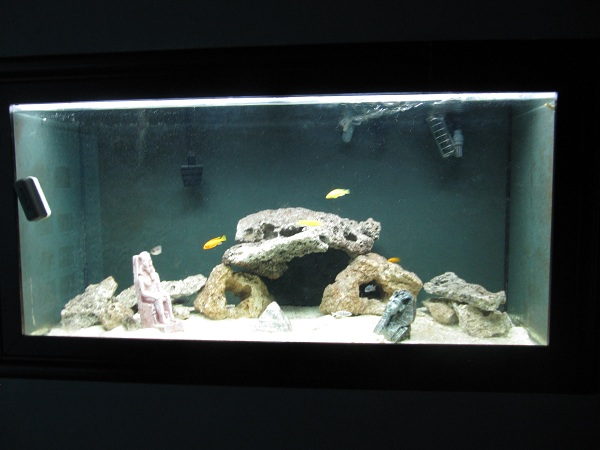 Cichlid Fish Tank Setup Tropical Fish Tank Setup