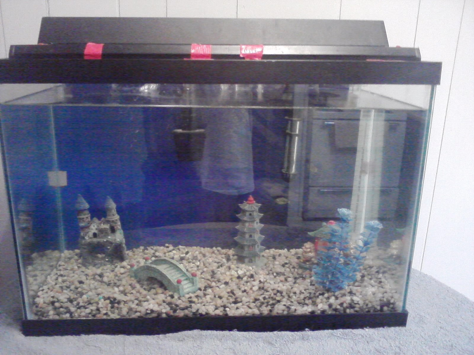 20 gallon tank in cm tank examples 20 for Fish tank 20 gallon