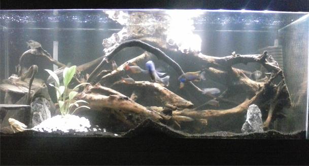 Man Cave Show Tank : Cichlids man cave tank
