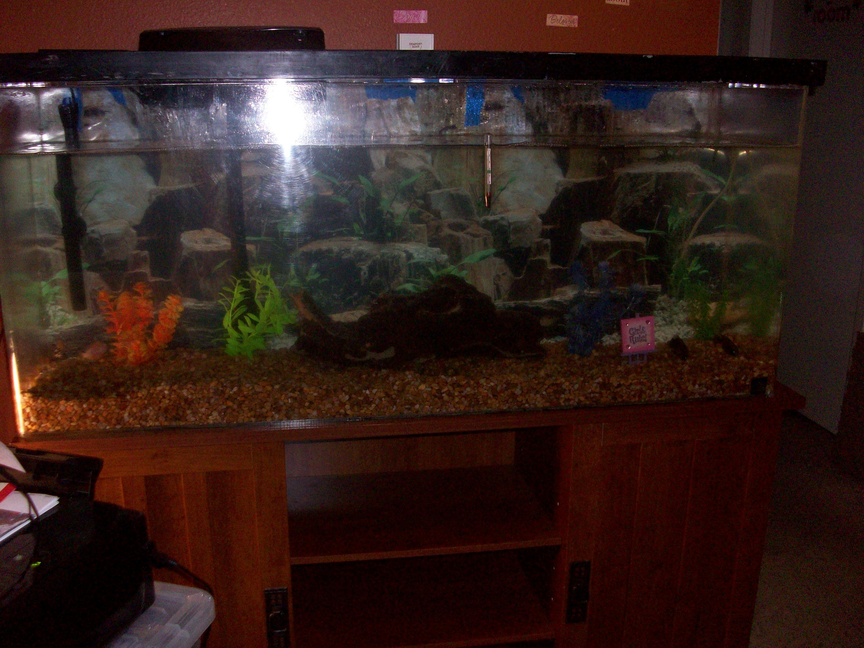 Tank examples cichlid fish tank for Cichlid fish tank