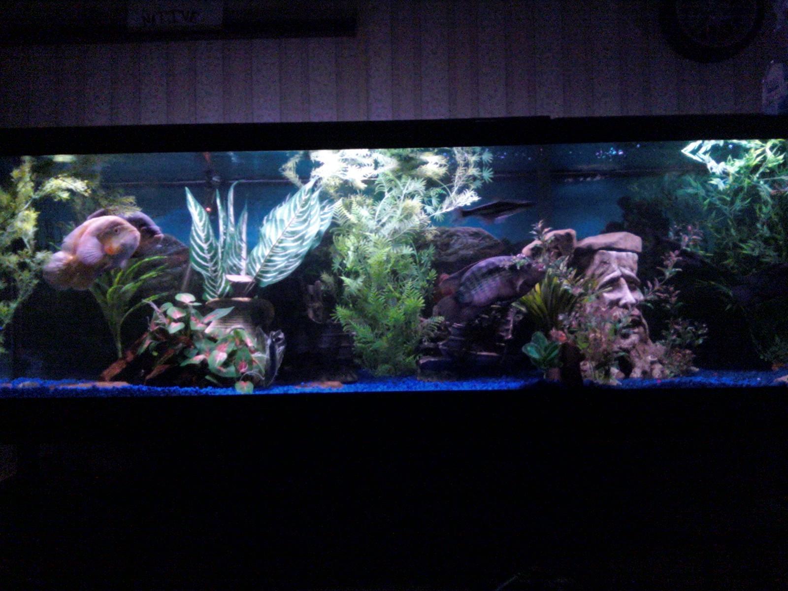 ... Photos - Related Pictures 125 Gallon Fish Tank Fish Tanks Aquariums