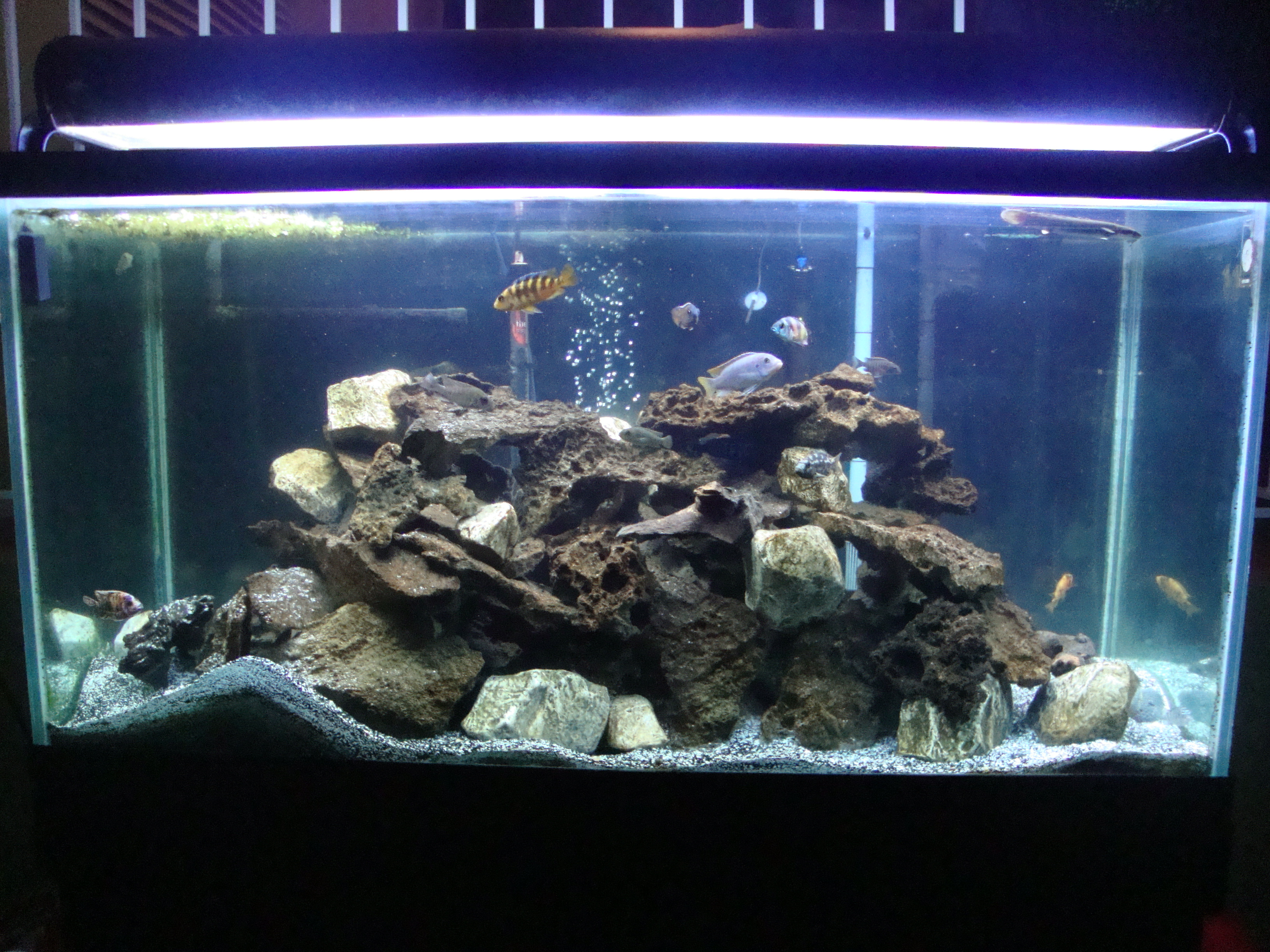 Tank examples 75 gallon african cichlid tank for African cichlid rock decoration