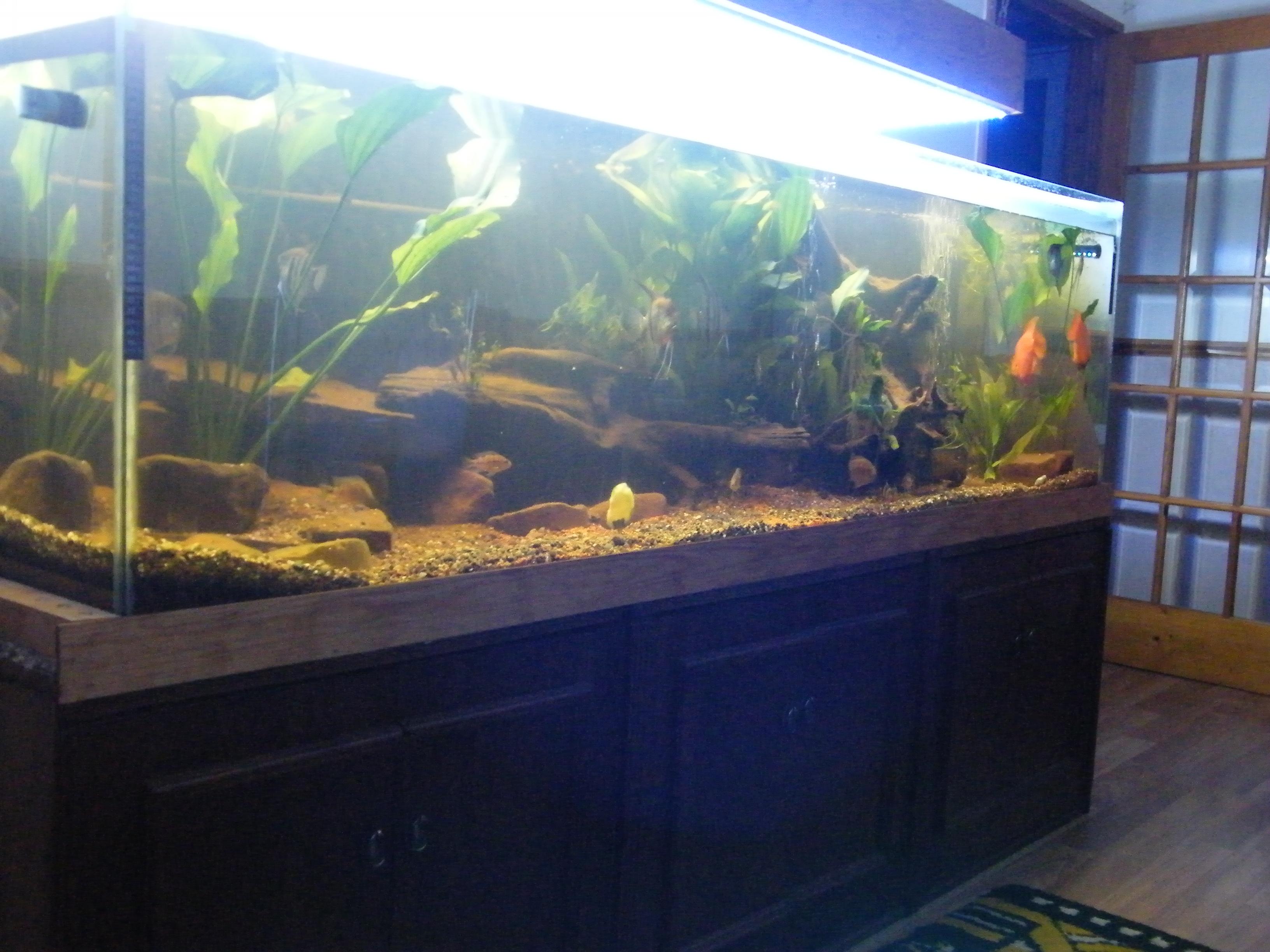 cichlids com  tank examples  fred ii