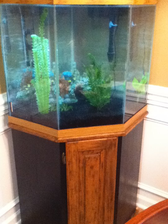 Tank examples for 55 gallon corner fish tank