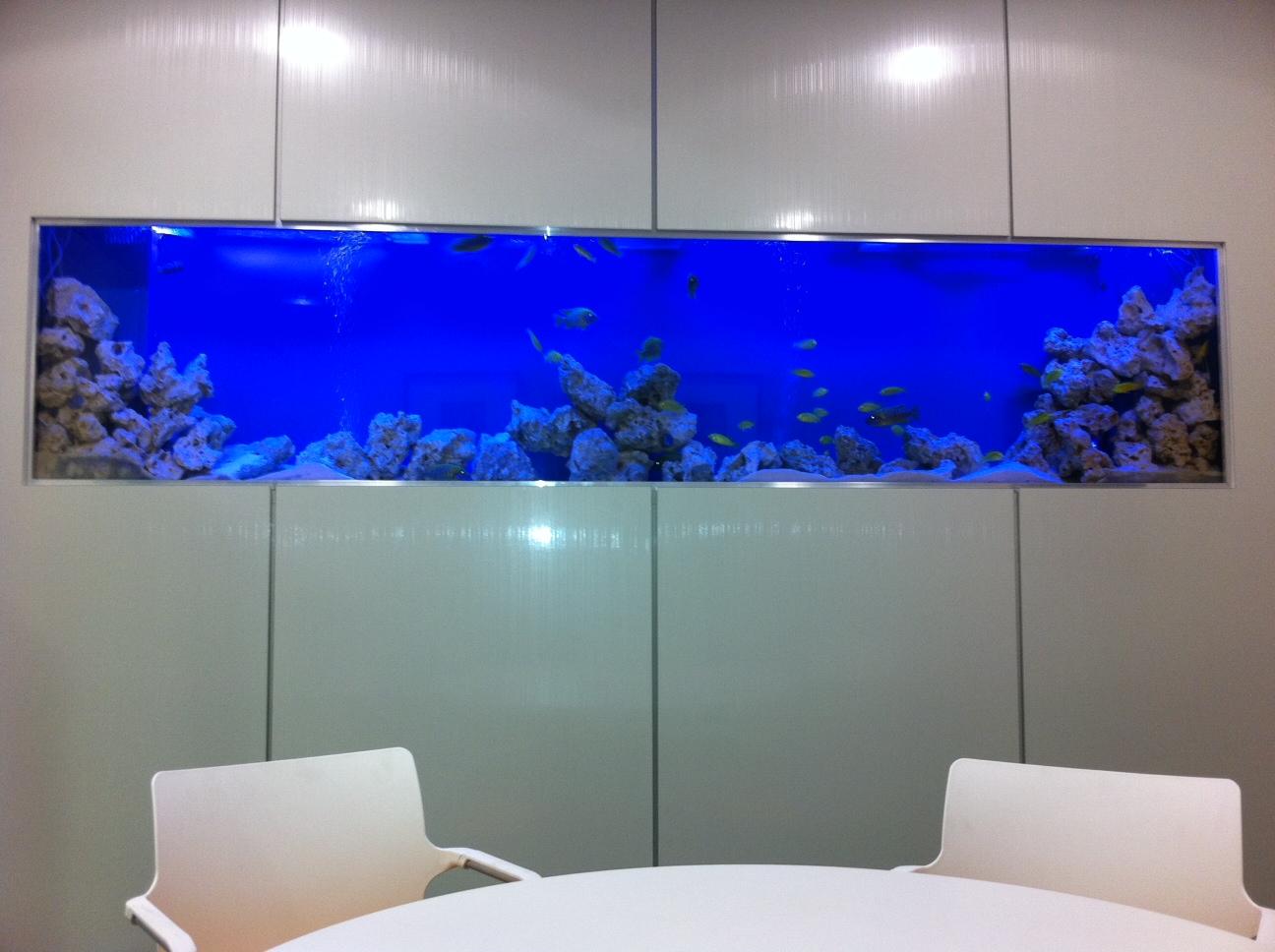 Office fish tank for Office fish tank