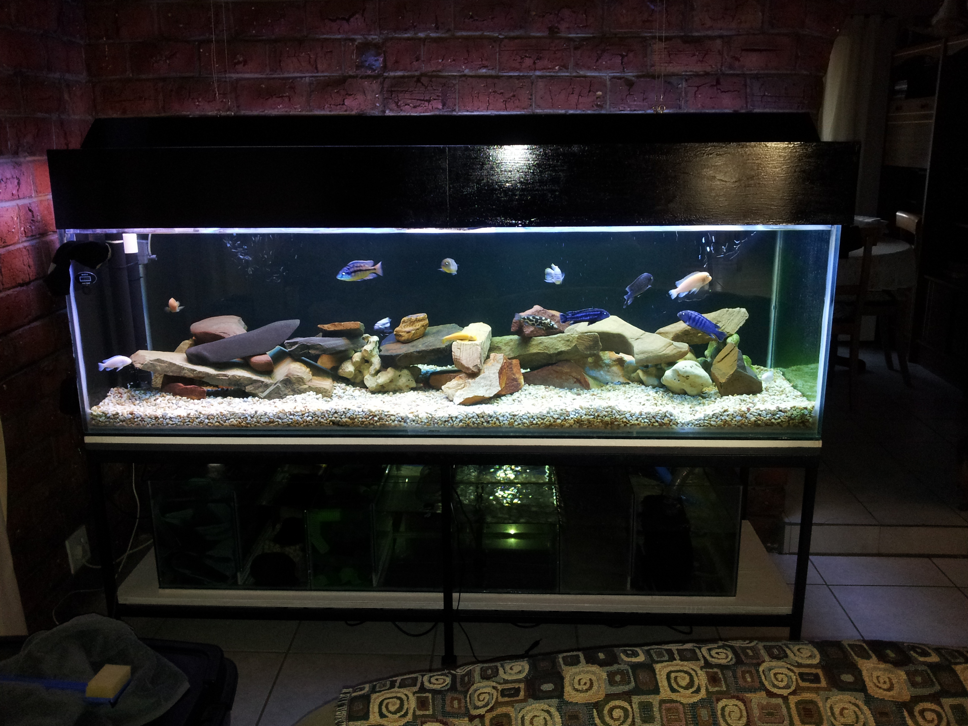 tank examples 200 gallon tank. Black Bedroom Furniture Sets. Home Design Ideas
