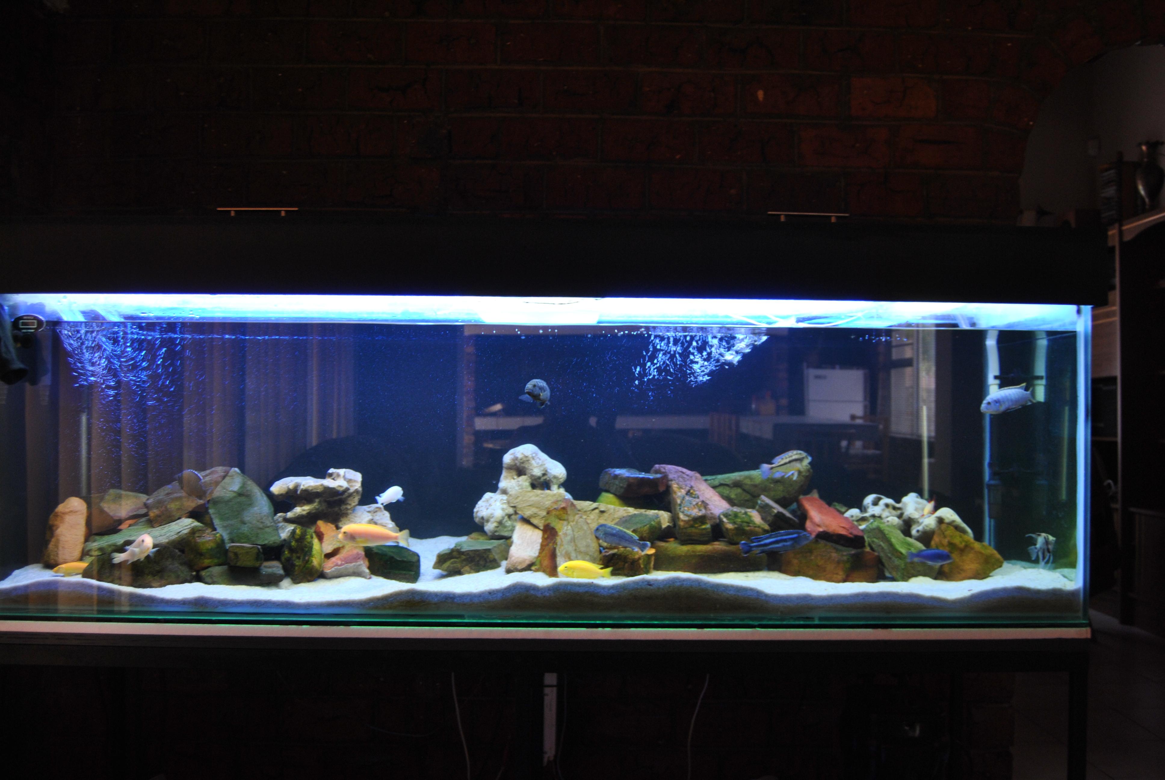 cichlids.com: 200 gallon Tank
