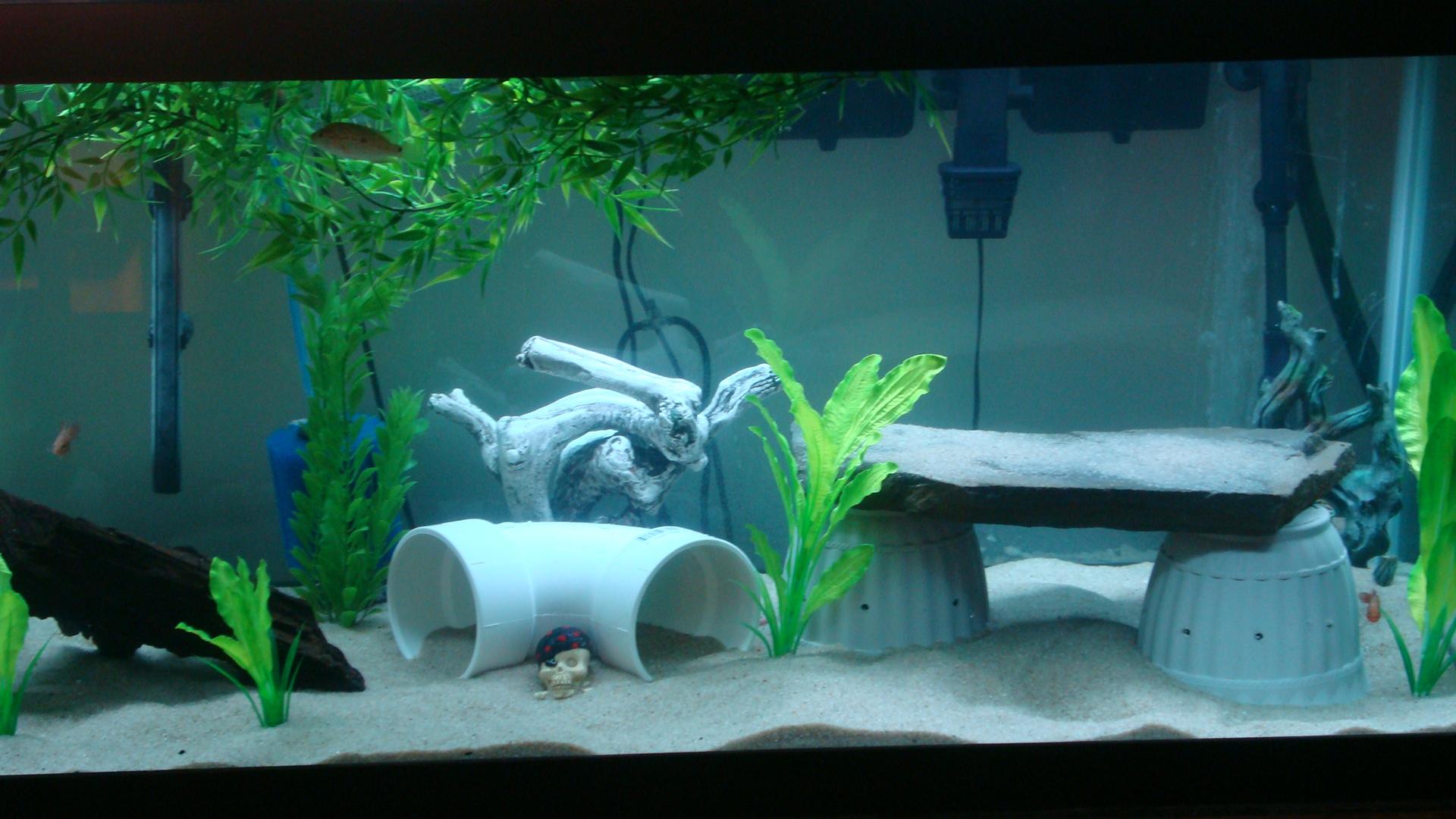 cichlids.com: 125 Gallon Tank
