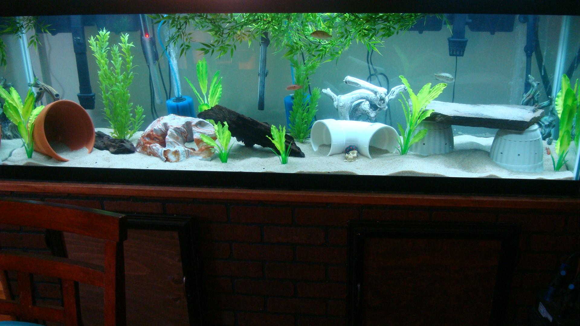 125 gallon tank for 125 gallon fish tank