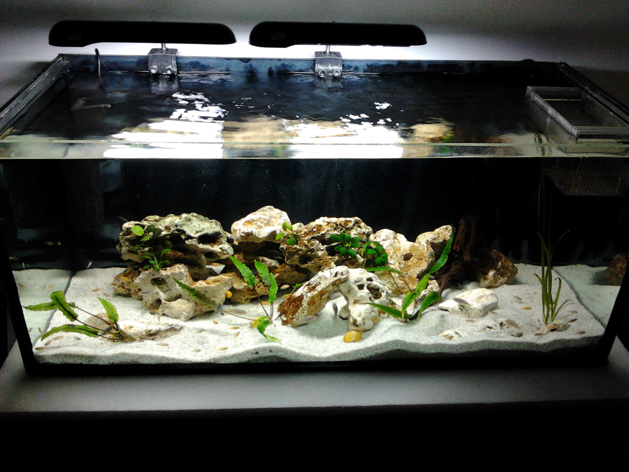 Cichlid Tank Decorations 140l Baby Cichlid Tank